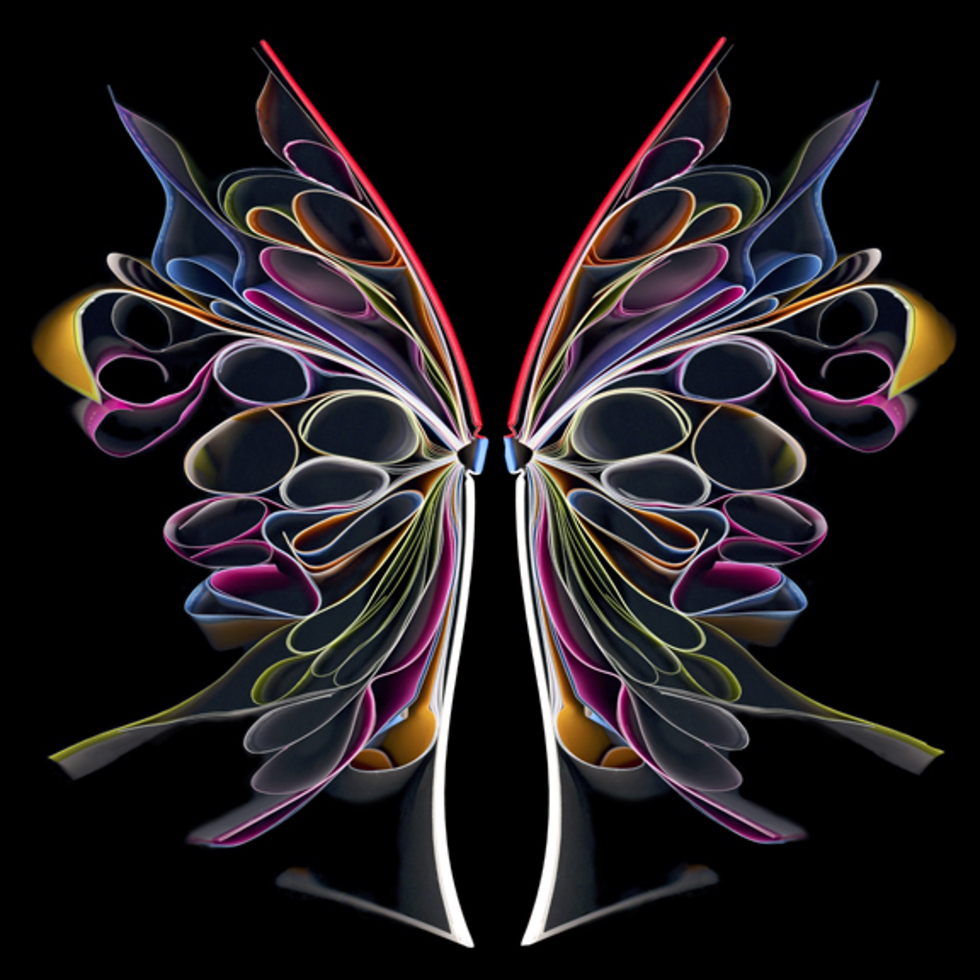 Butterfly 2 by Cara Barer