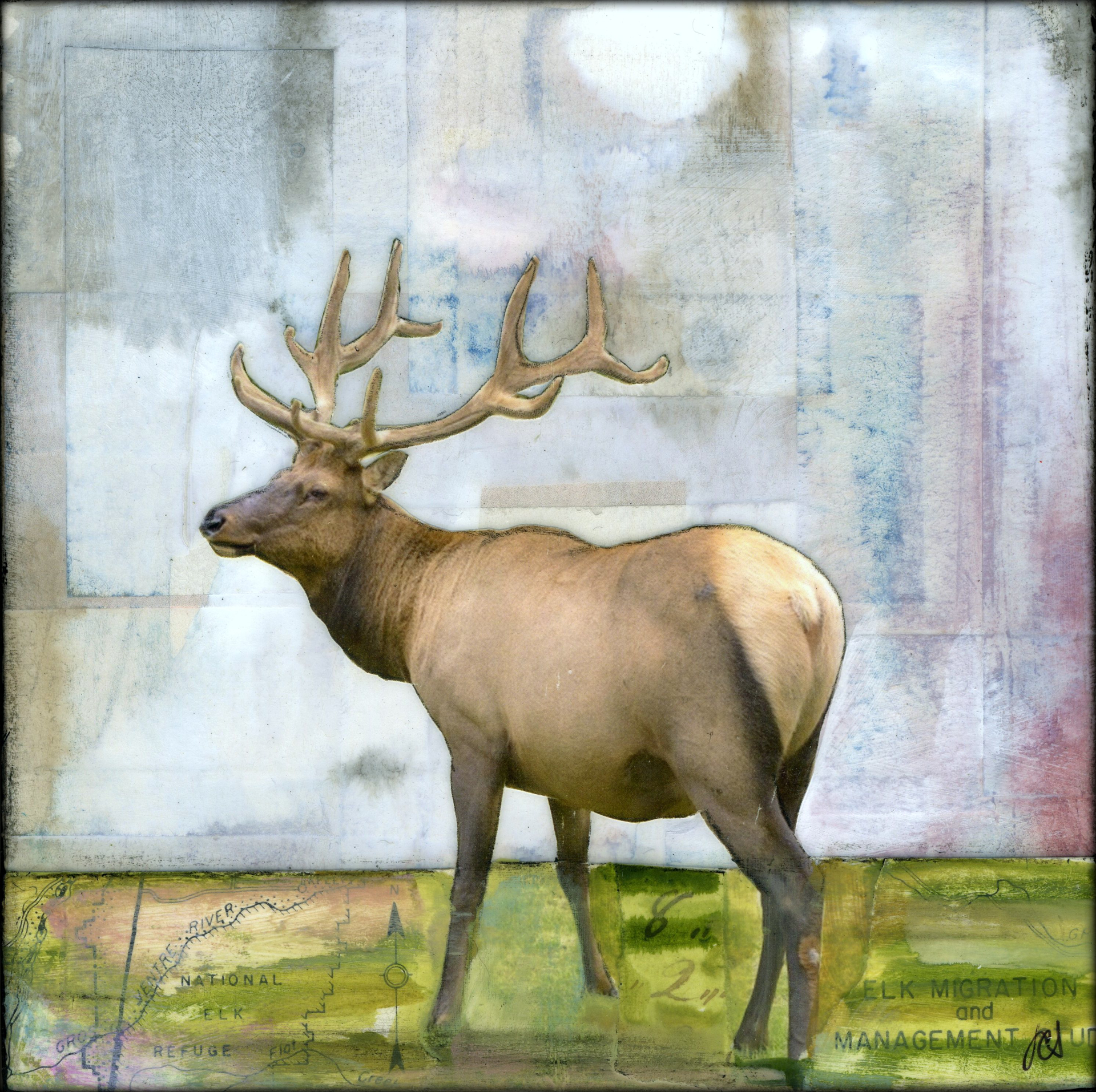 Roaming Elk by JC Spock
