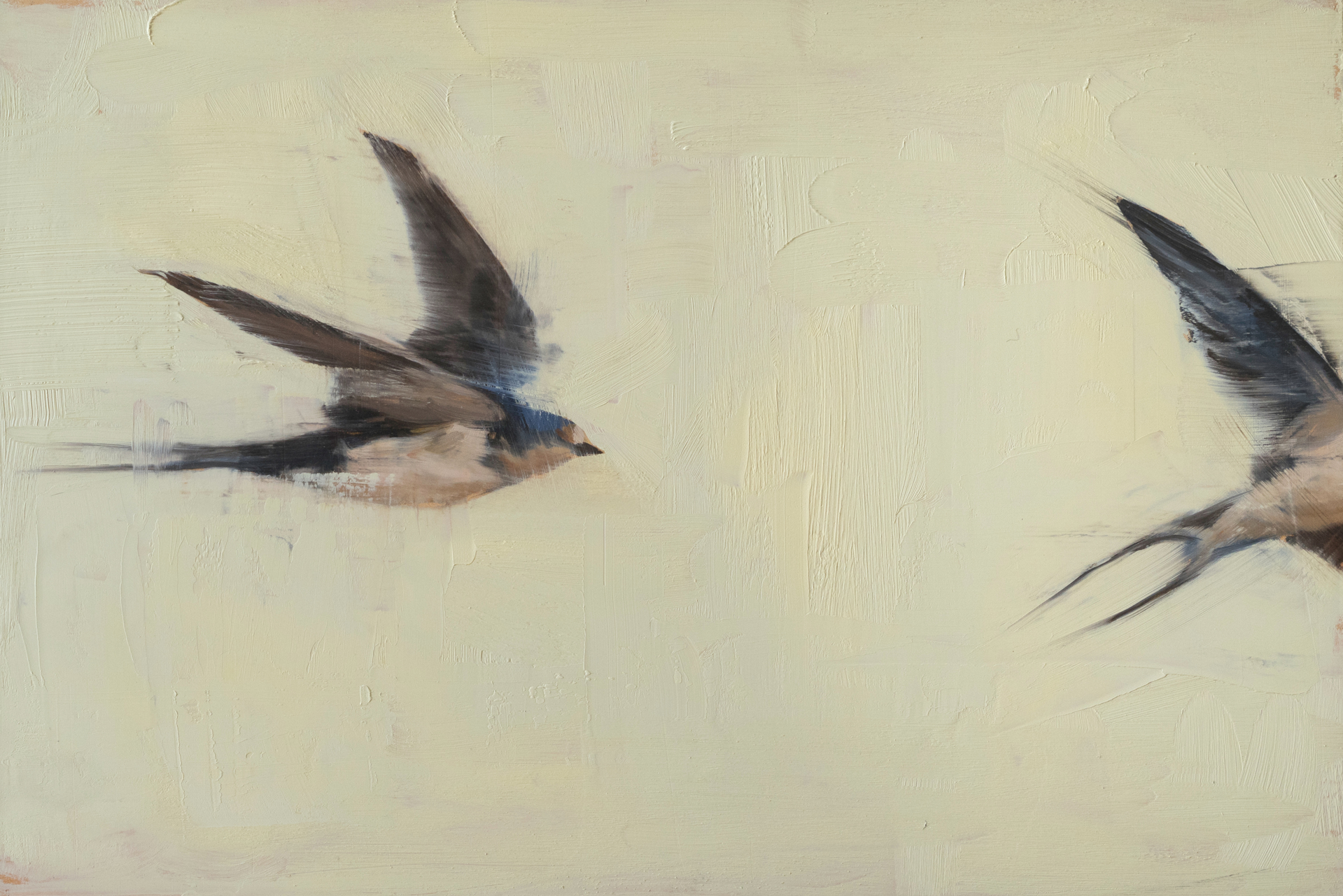 Swallows by Robin Cole