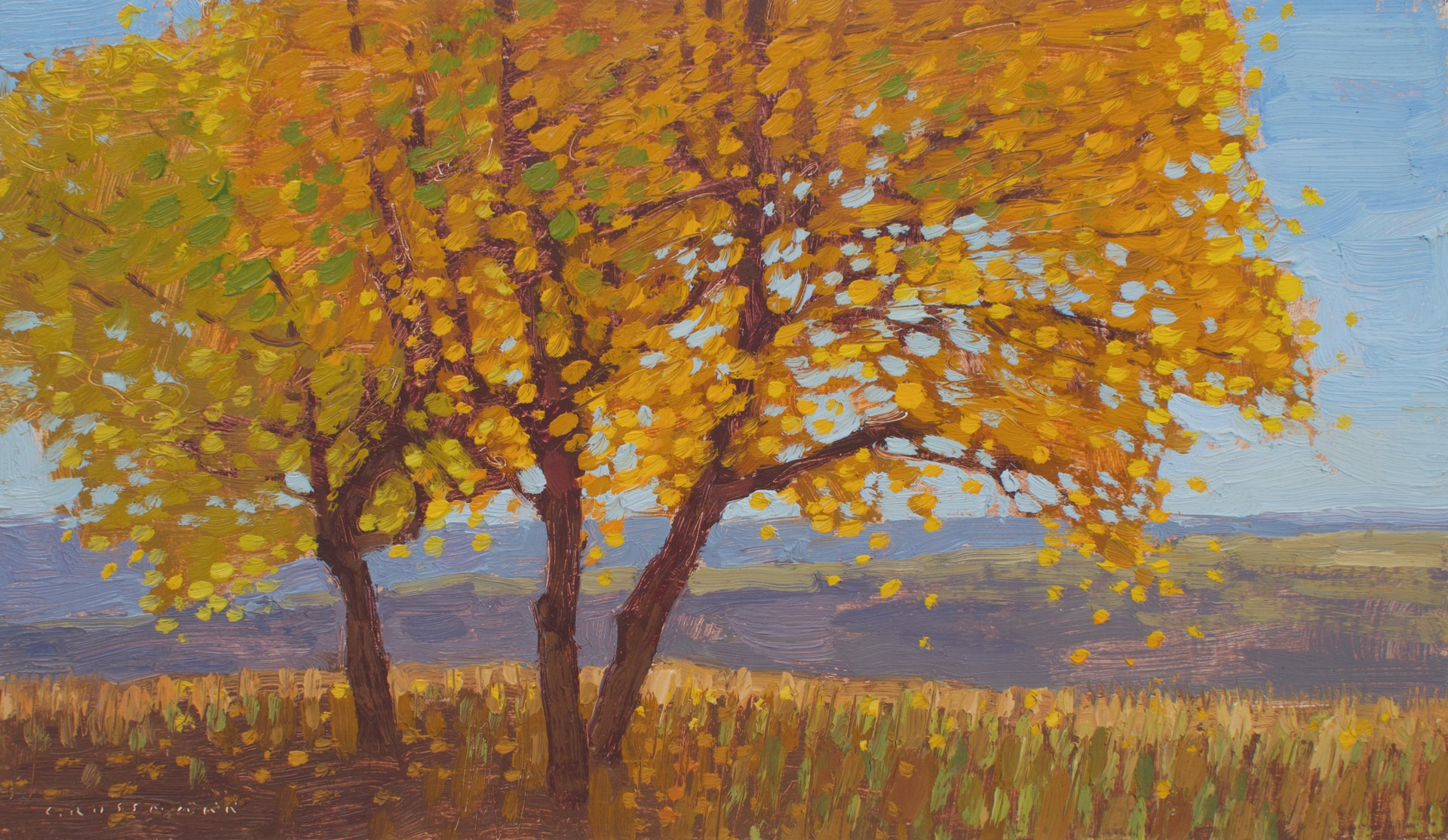 Cottonwoods with Changing Autumn Leaves  by David Grossmann