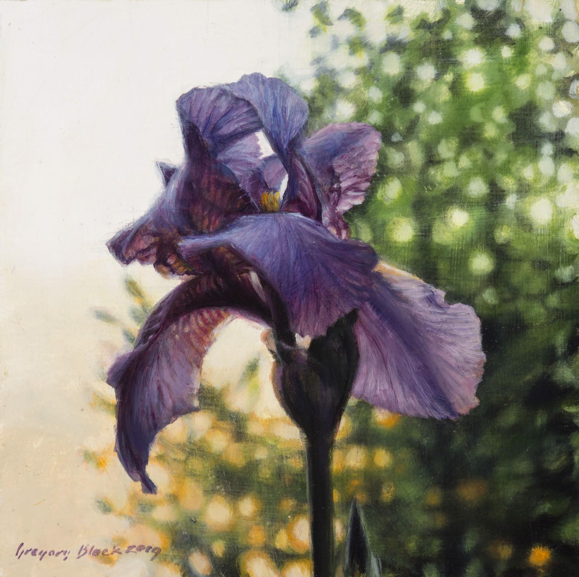 Iris 4 by Gregory Block