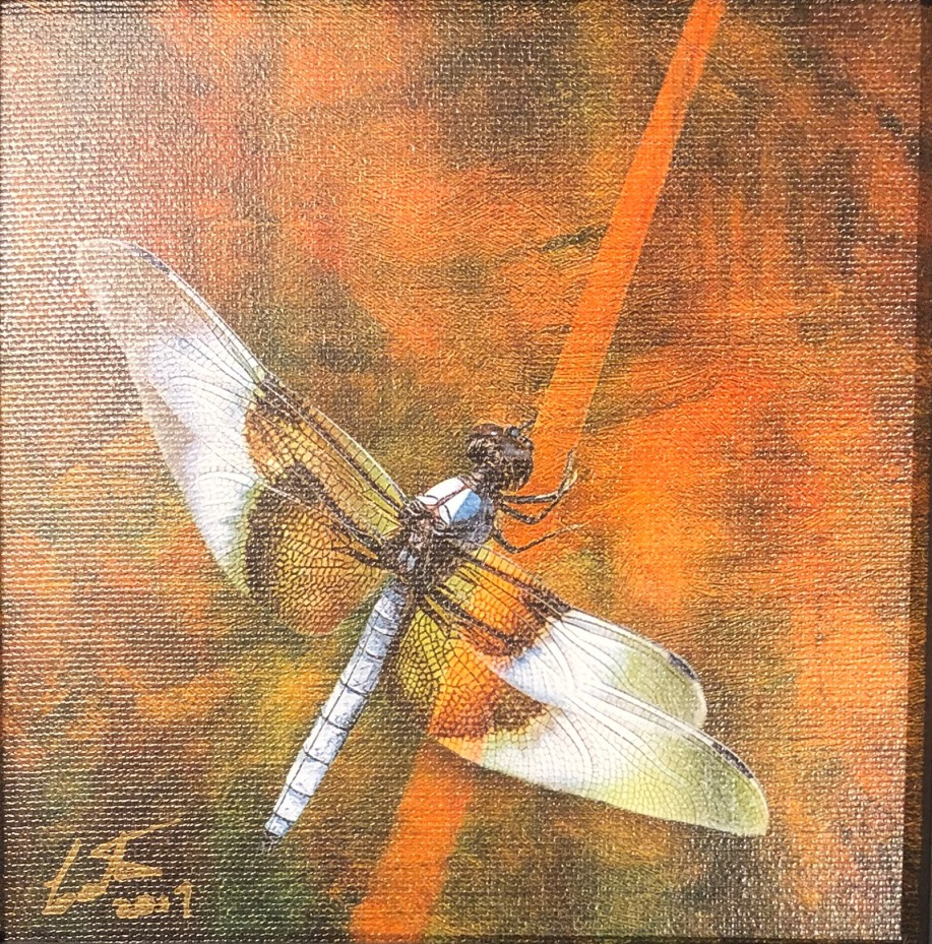 Dragon Fly-White by Bob Coates