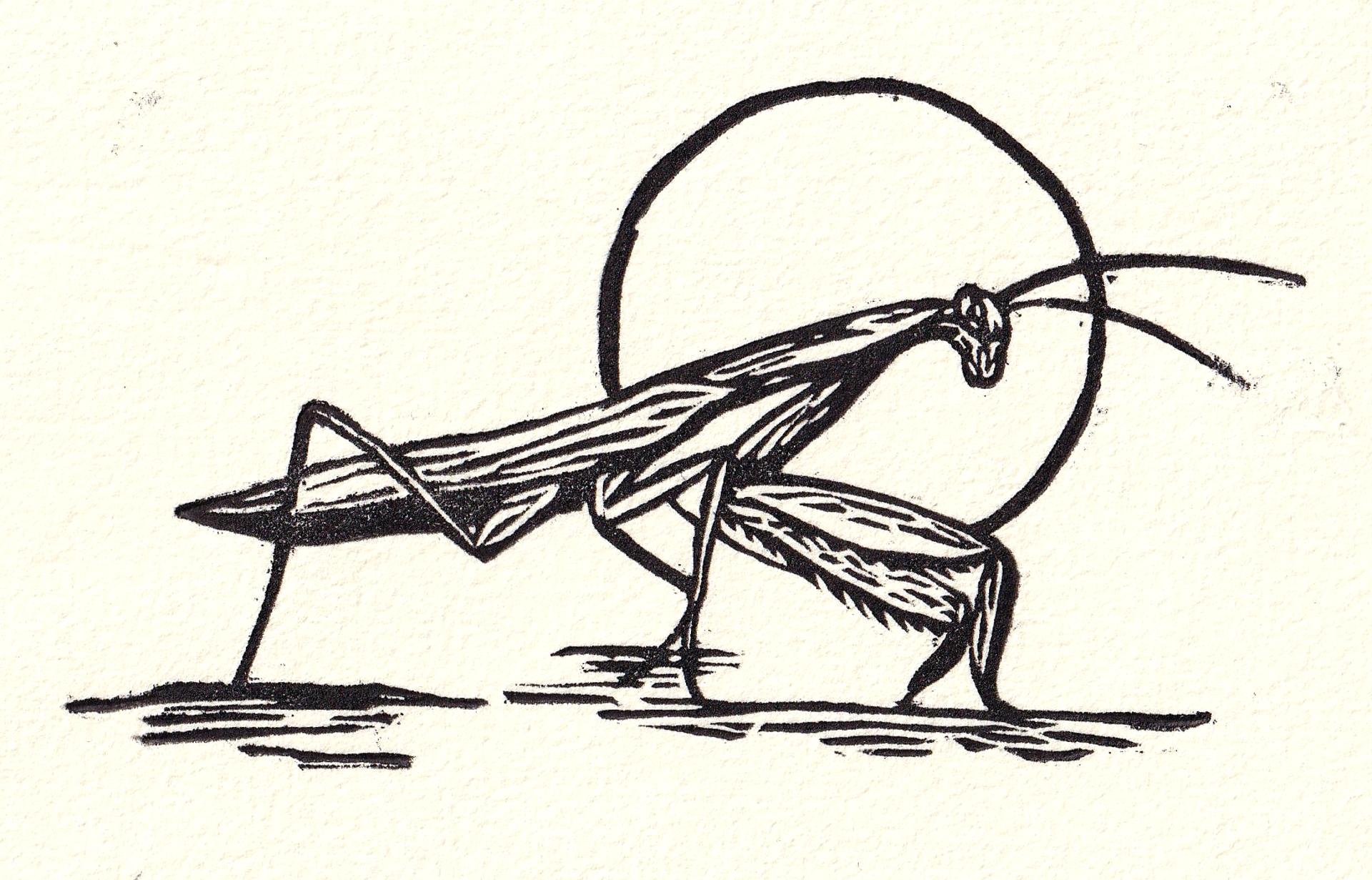 Mantis by Miguel Jimenez Martinez