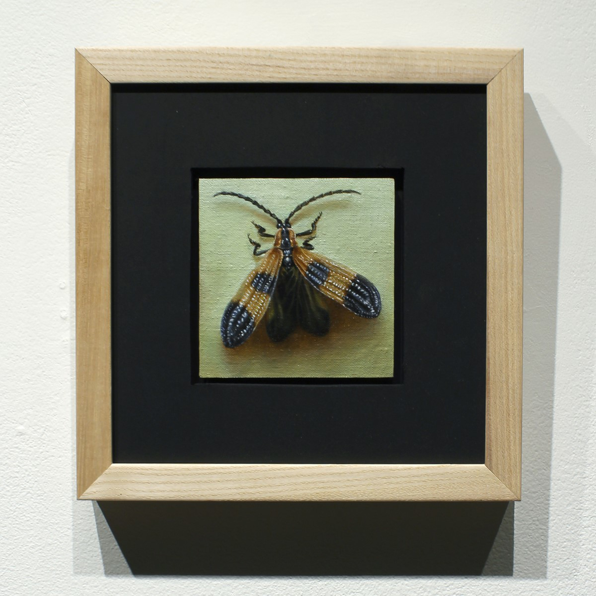 Banded Net-winged Beetle by Zane York