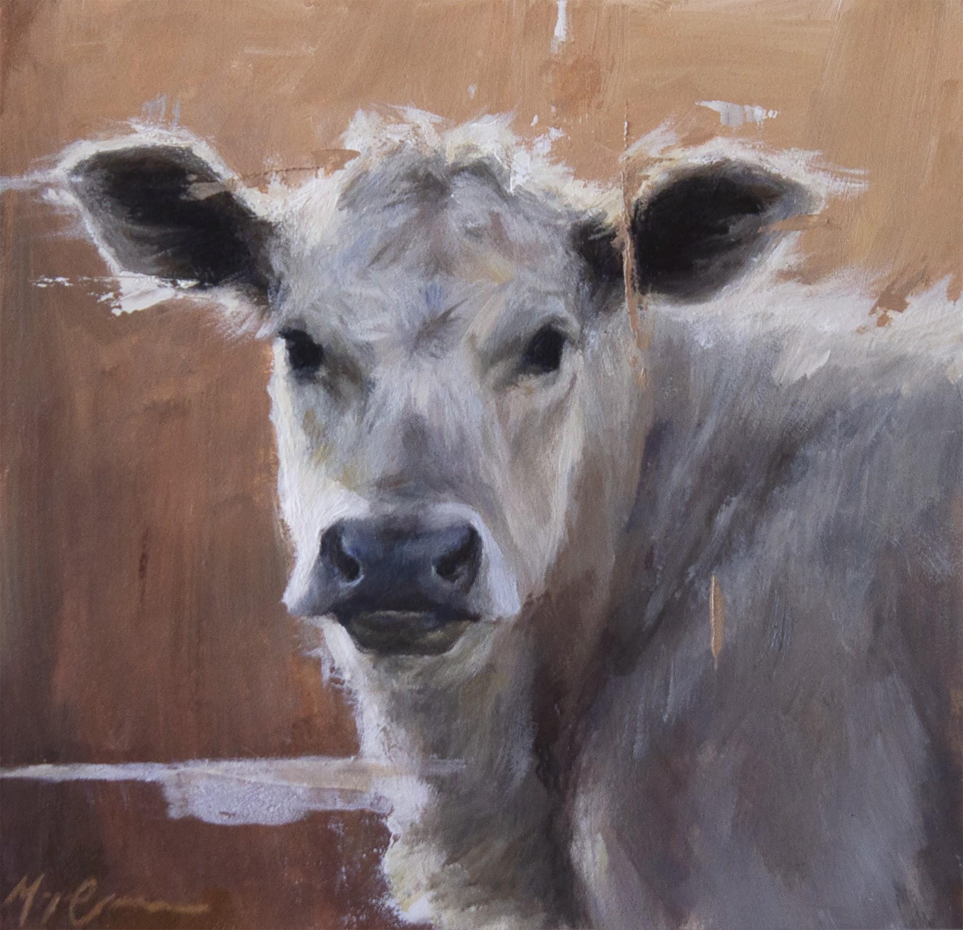 British White Calf by Morgan Cameron