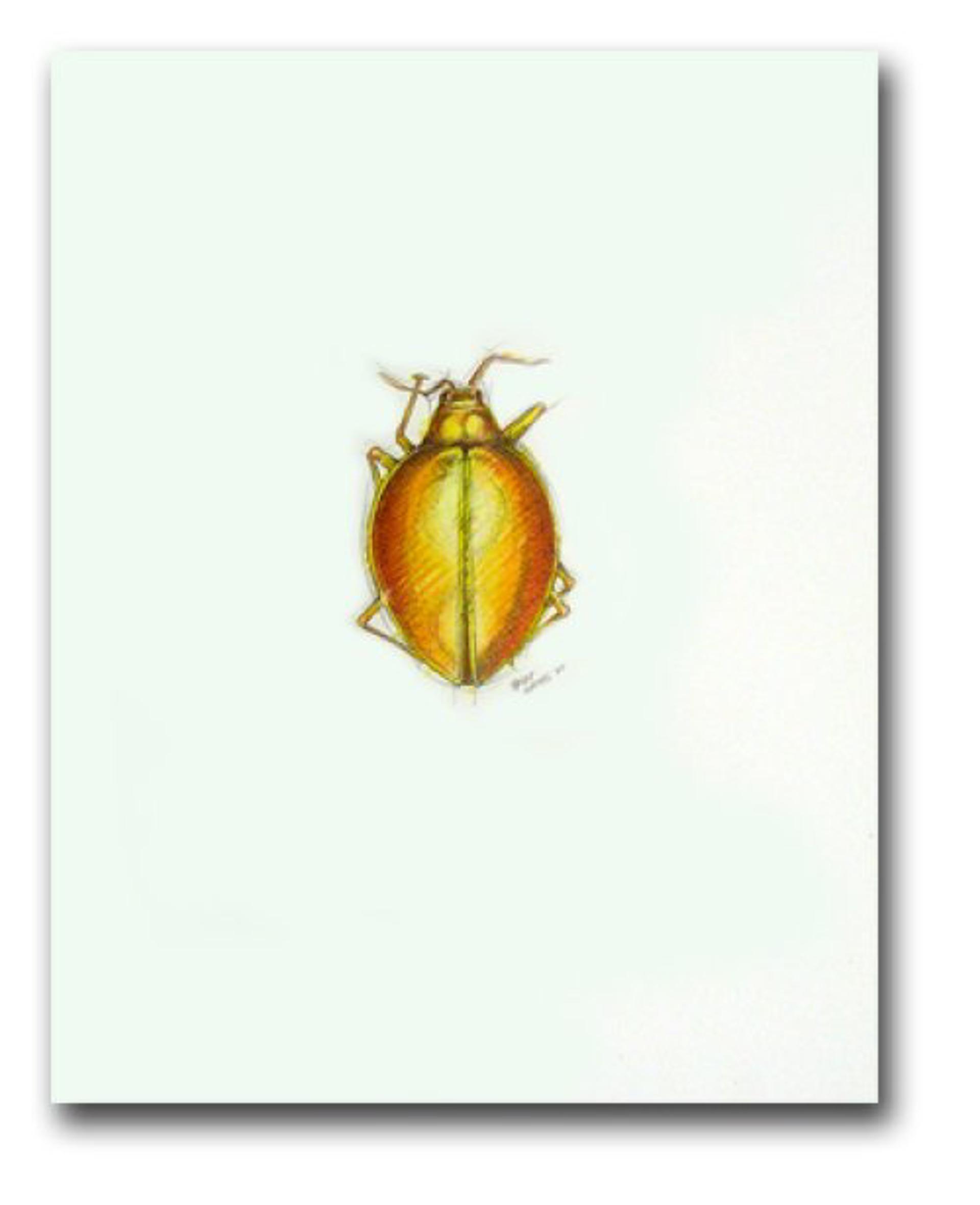 Fungus Beetle by Peter Hamel