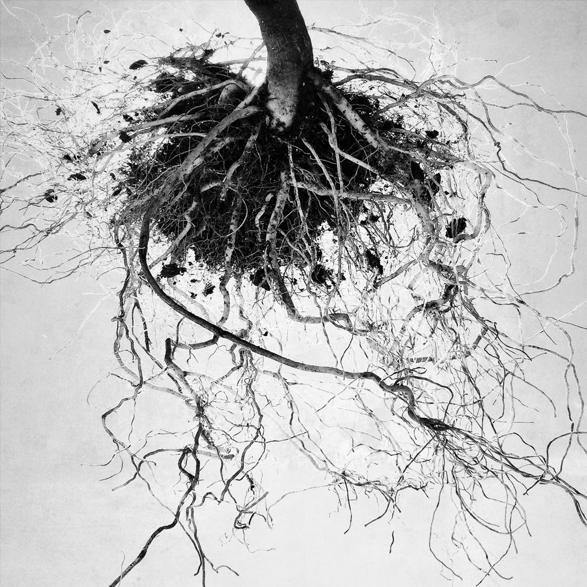 Roots by Allan Bailey