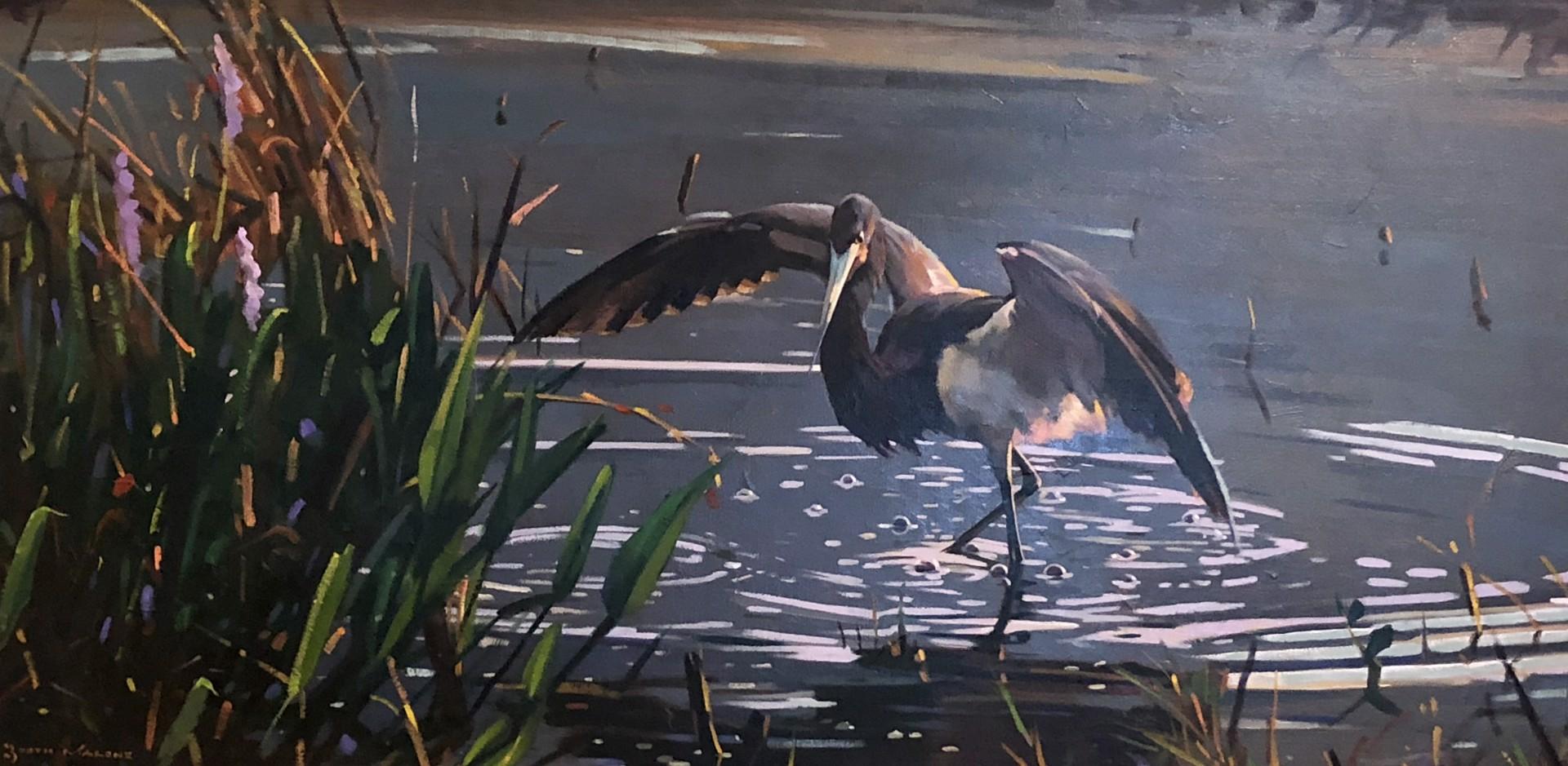 Louisiana Heron by Booth Malone