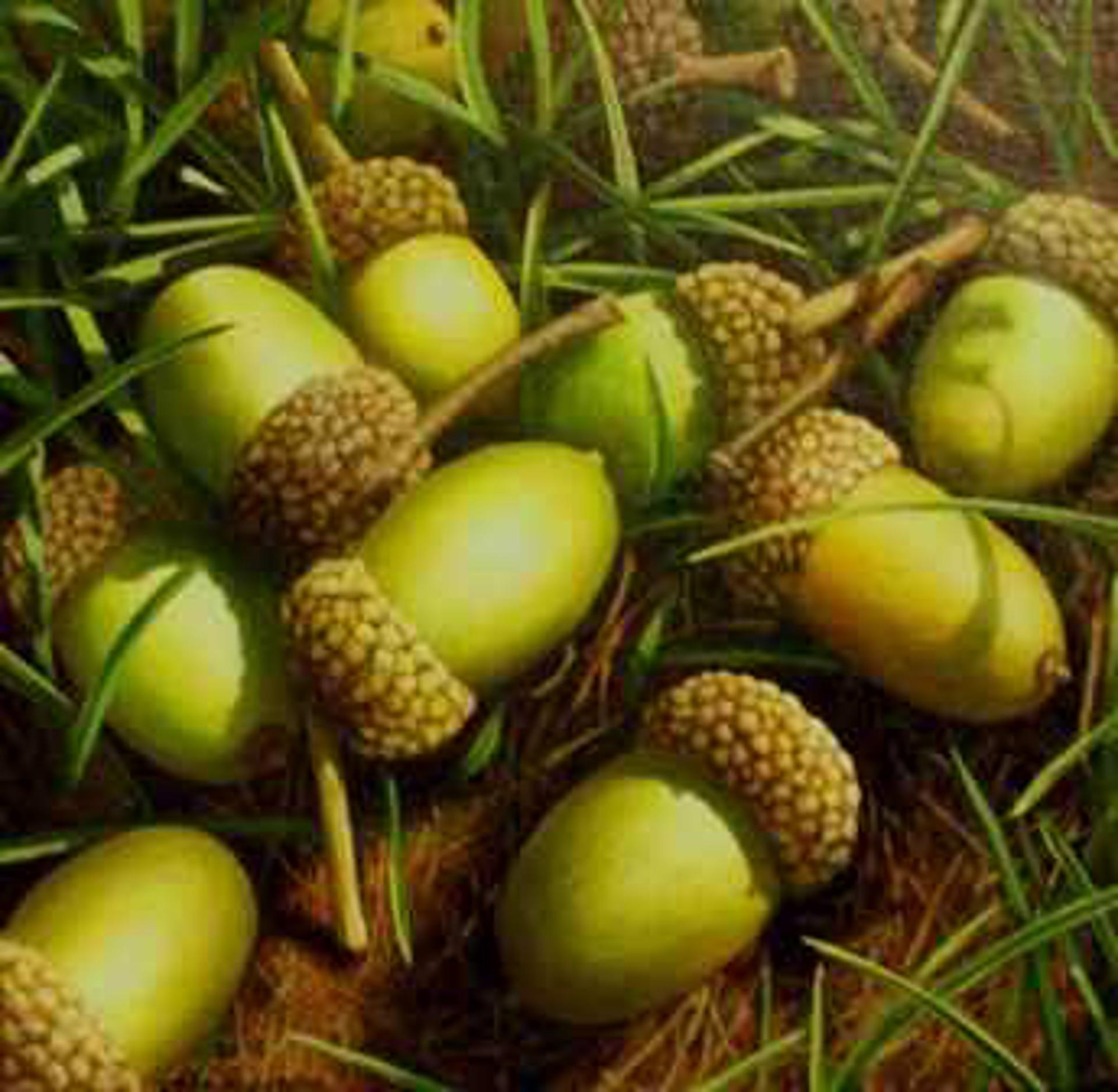 Acorns and Grass by Loren DiBenedetto