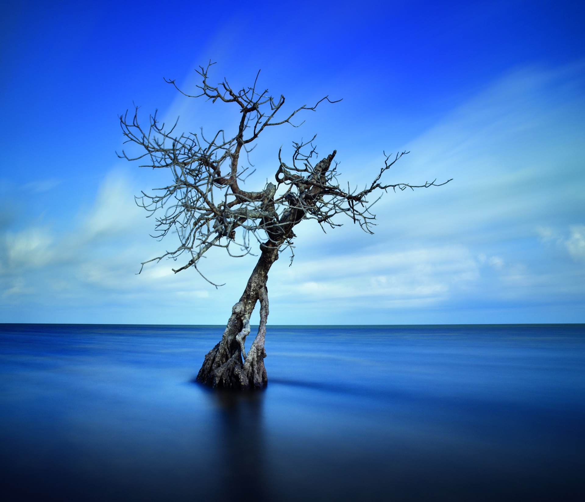 Symphony in Blue, Long Key, Florida by David Magee