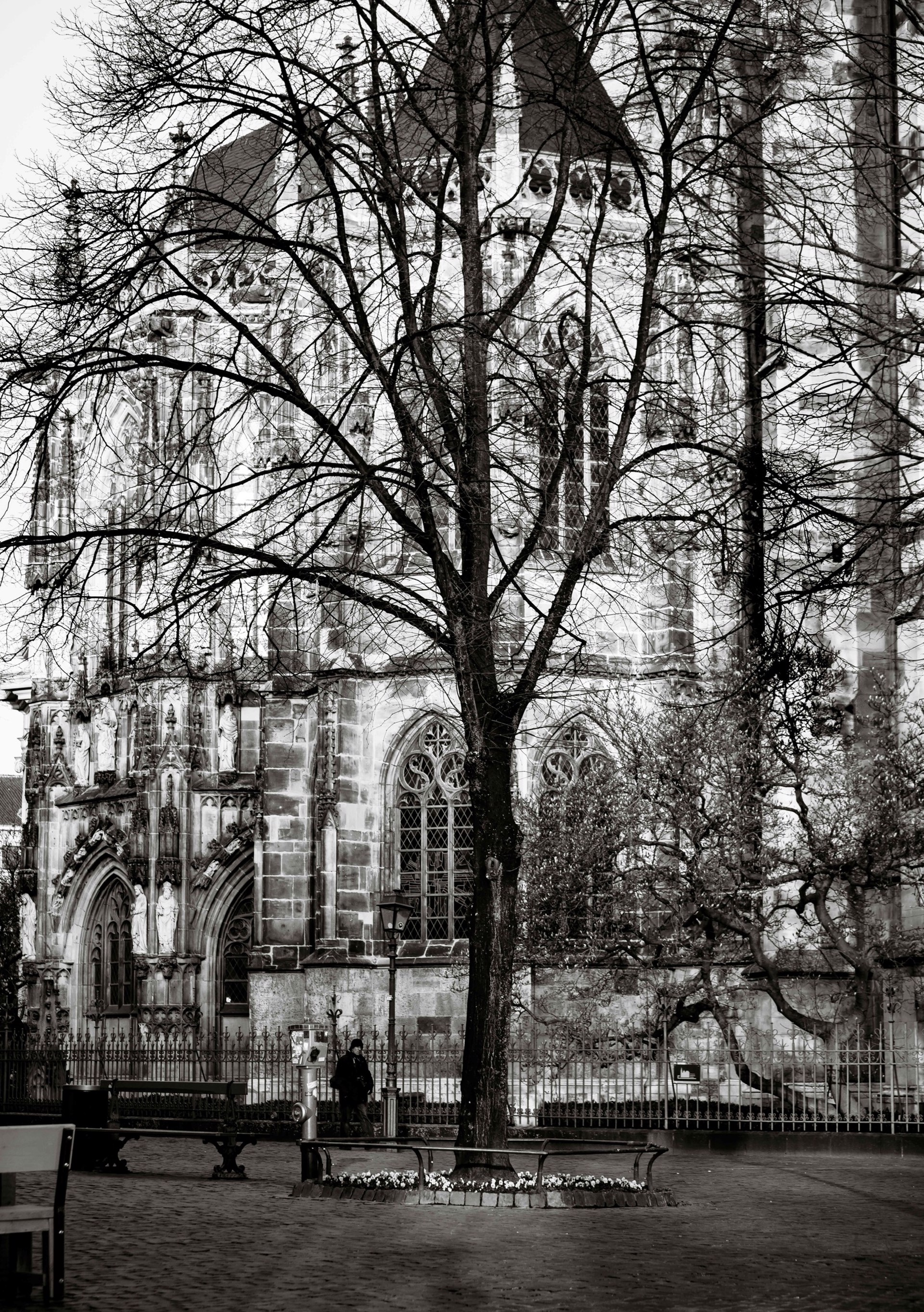 aachen tree II by Alex Nyerges