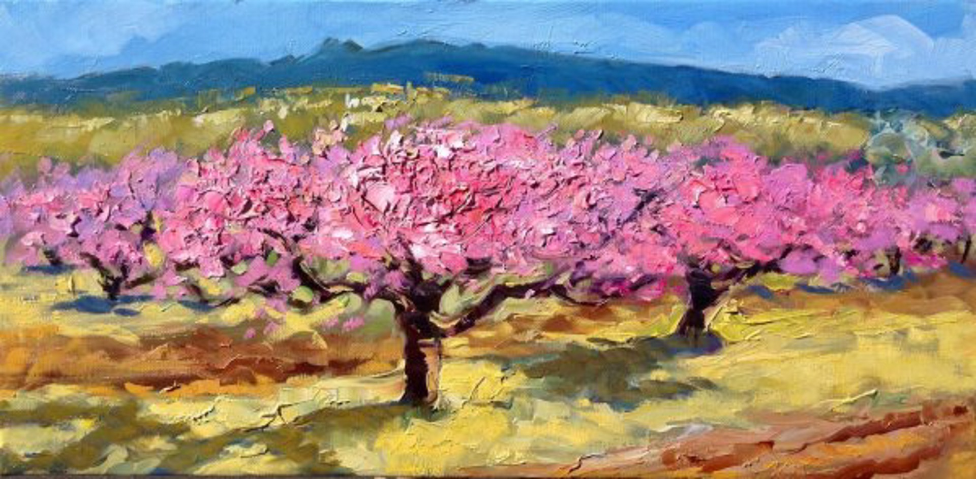 Apricot Blossoms In The Field by Maria Bertrán