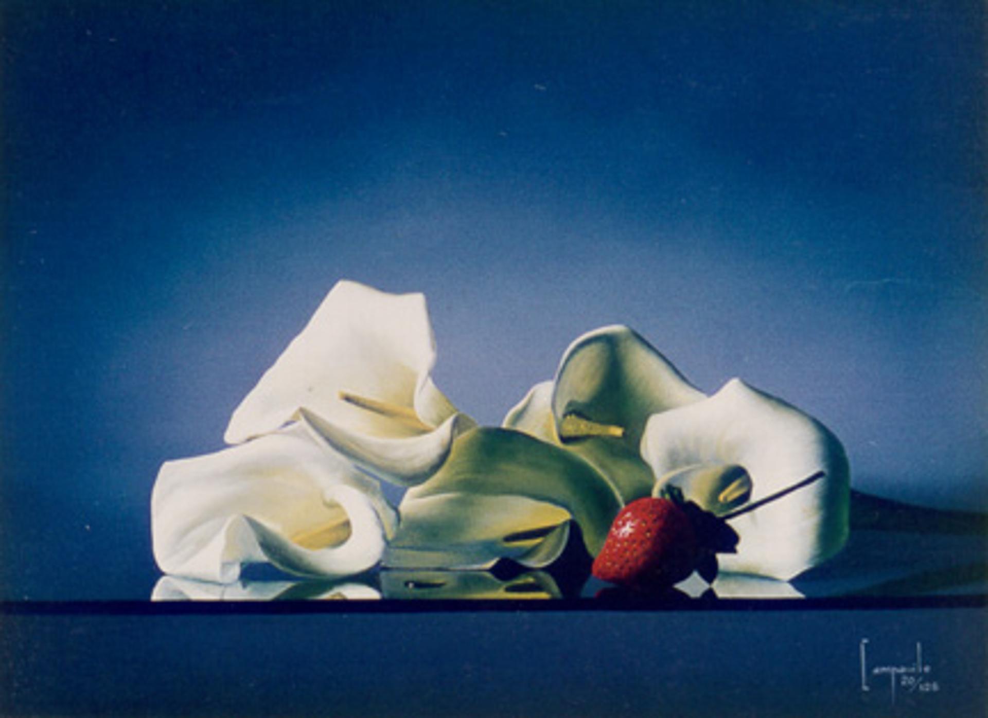 Intruder by Dario Campanile