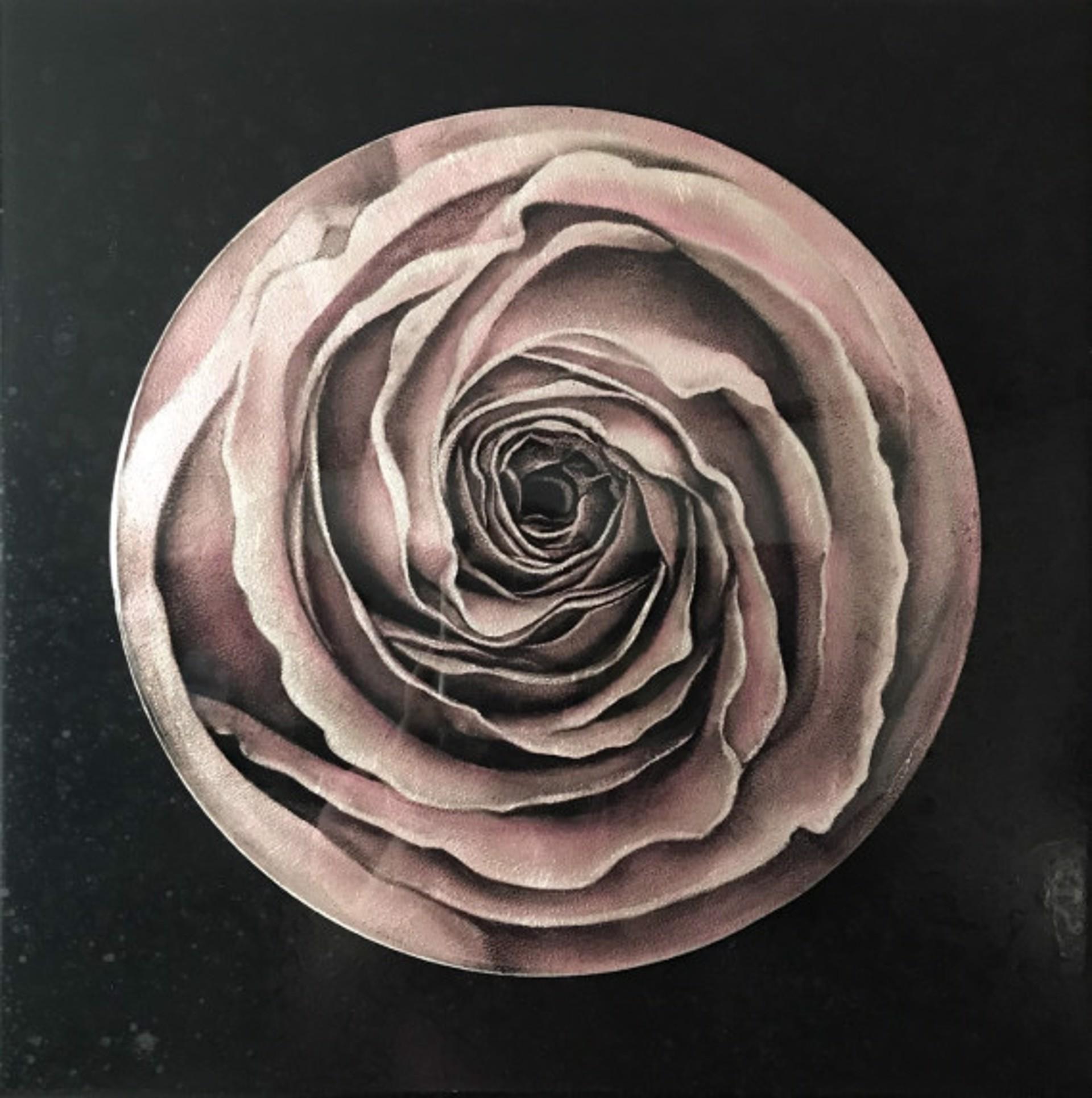 Rosette I by Larissa Morais