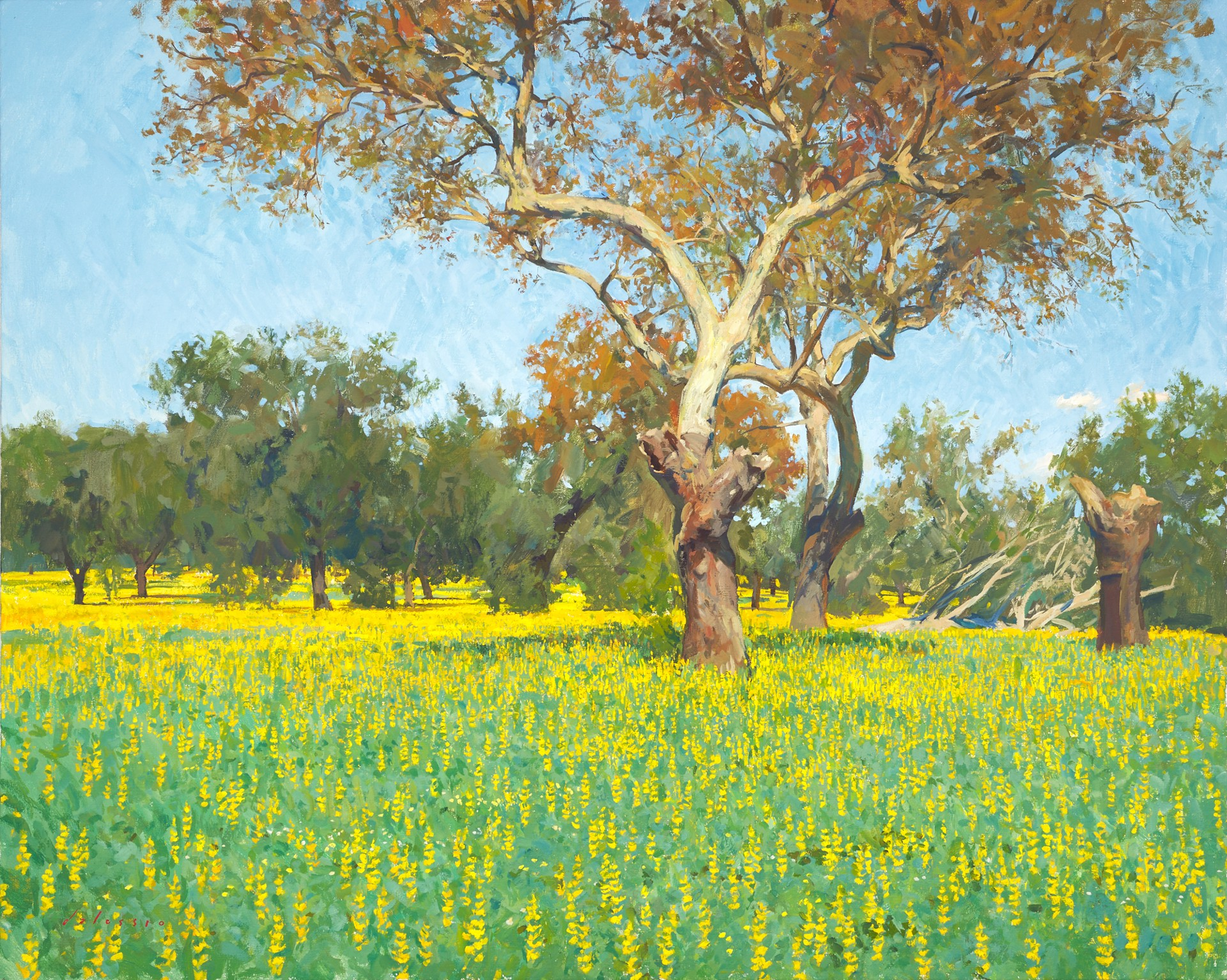 Yellow Lupin in a Cork Oak Forest by Marc Dalessio