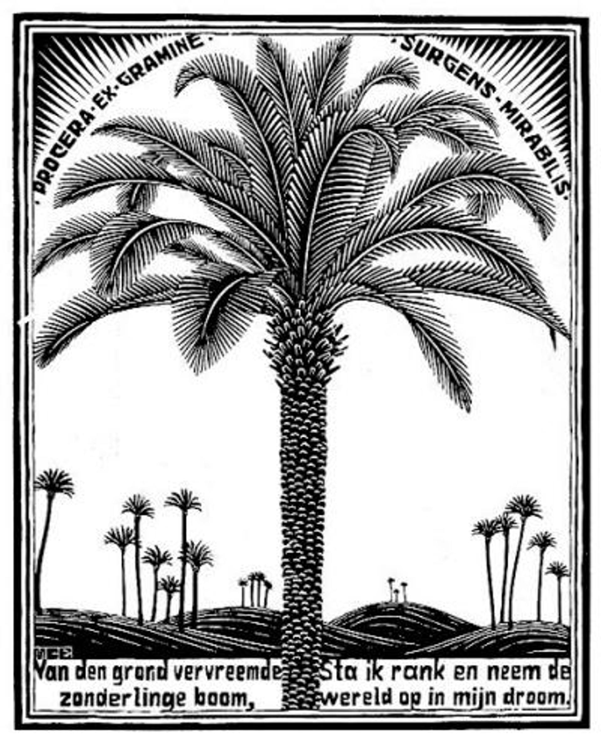 Emblemata - Palm Tree by M.C. Escher