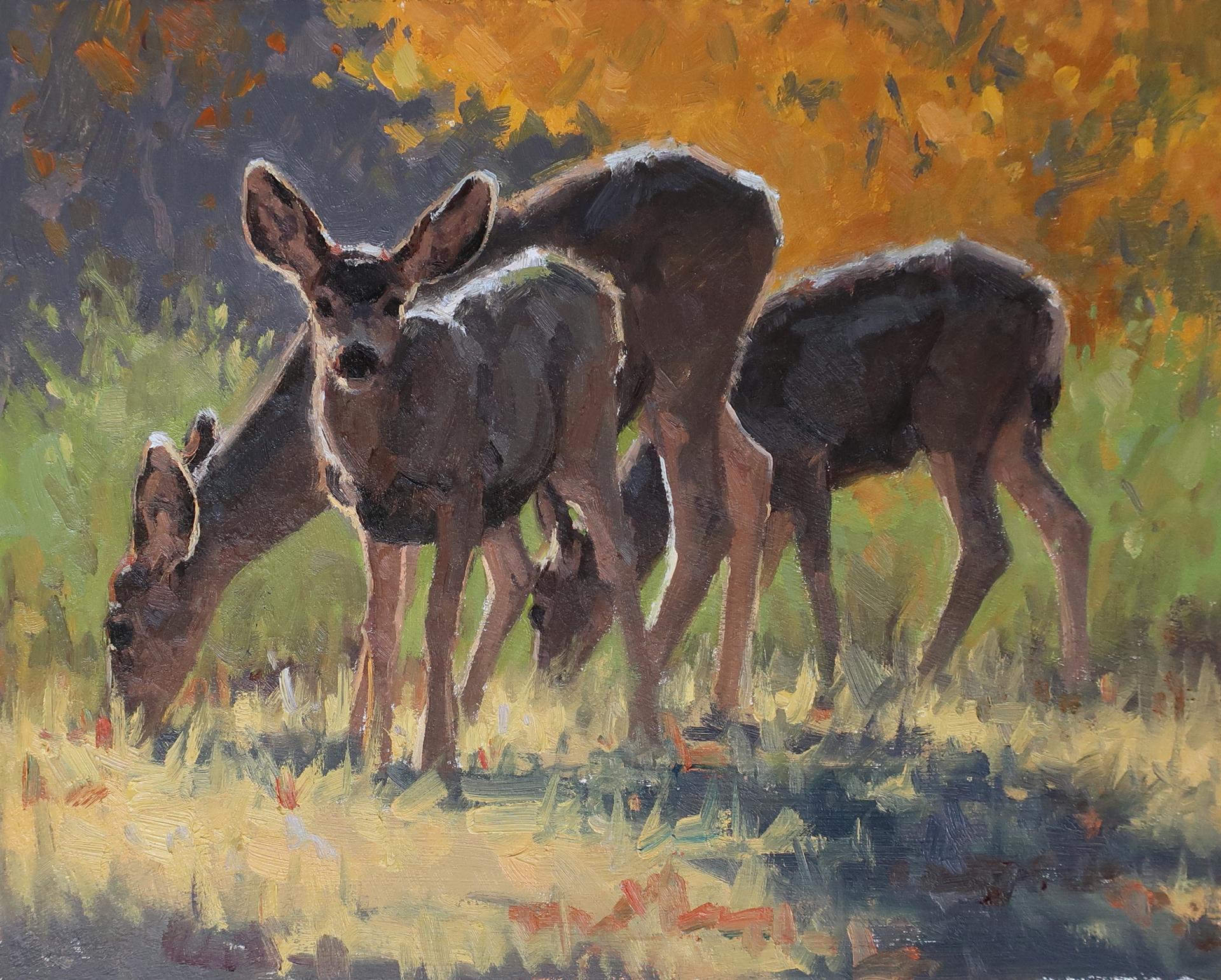 Mule Deer by Tiffany Stevenson