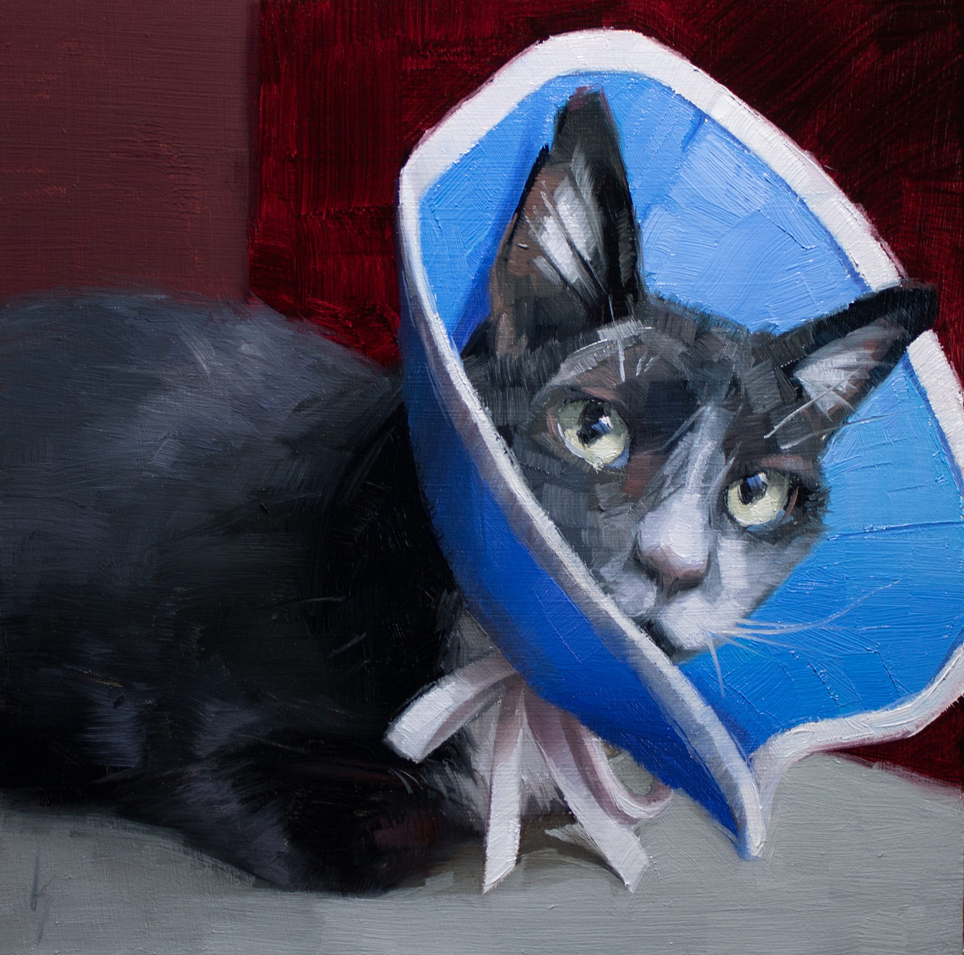 Cone of Shame by Kirsten Savage