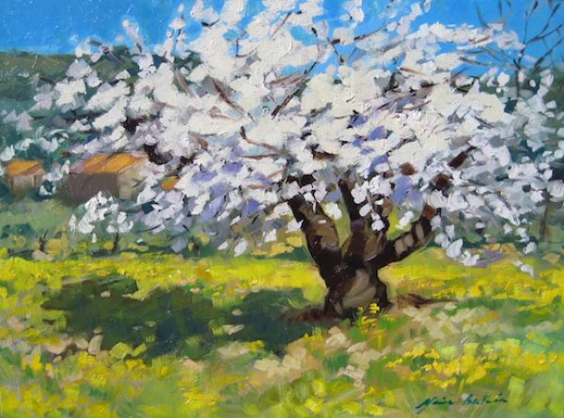 Tree Full Of Cherry Blossoms by Maria Bertrán