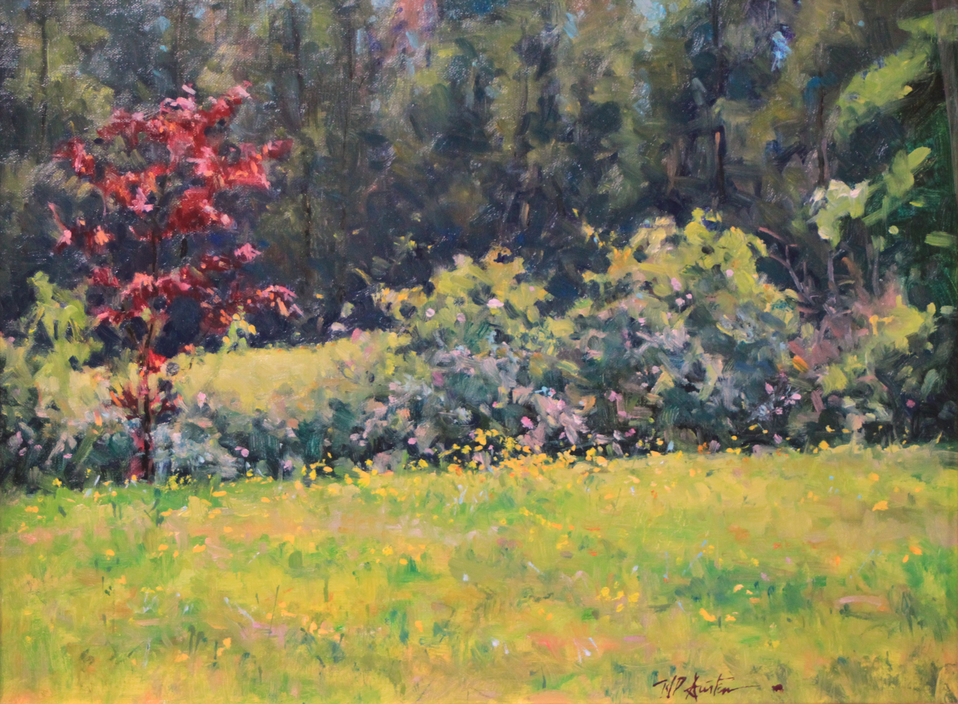 Buttercups and Wild Roses by Perry Austin