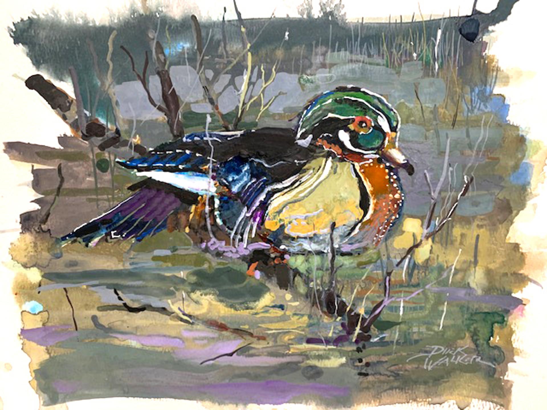 Male Wood Duck by Dirk Walker