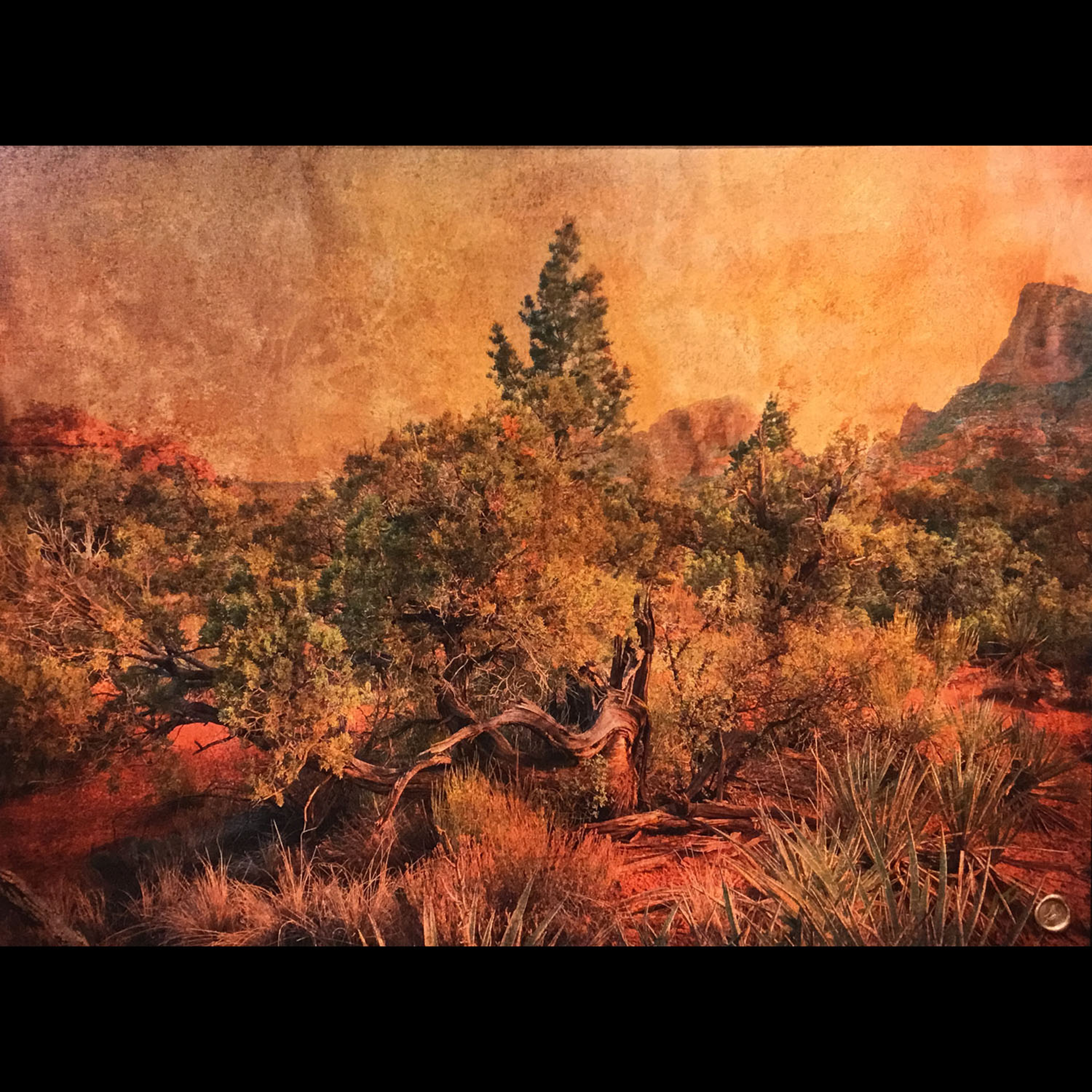 Juniper-Red by Bob Coates