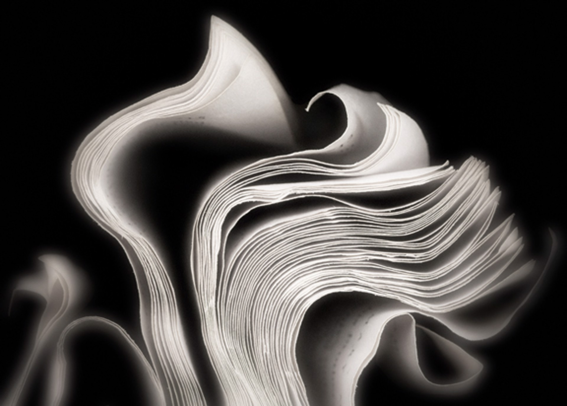 Wave and Fog by Cara Barer