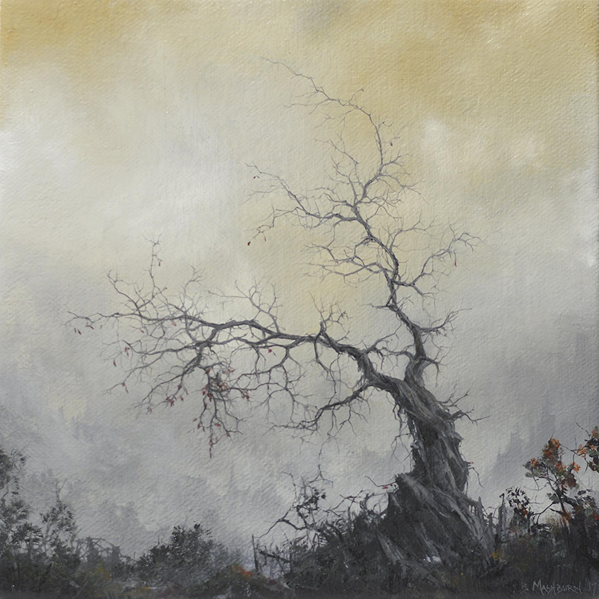 Tree II by Brian Mashburn