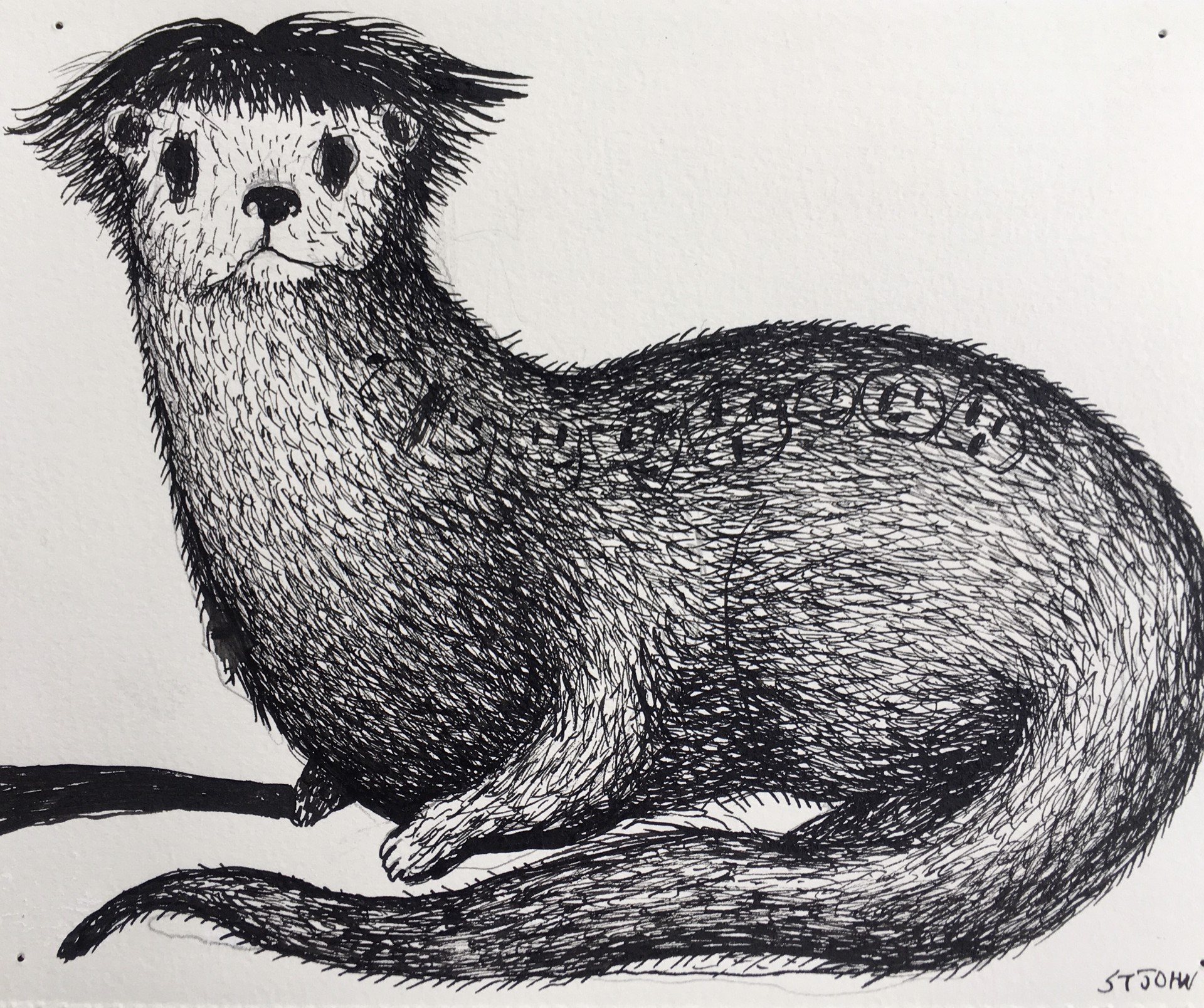 Otter with Good Hair by Christopher St. John