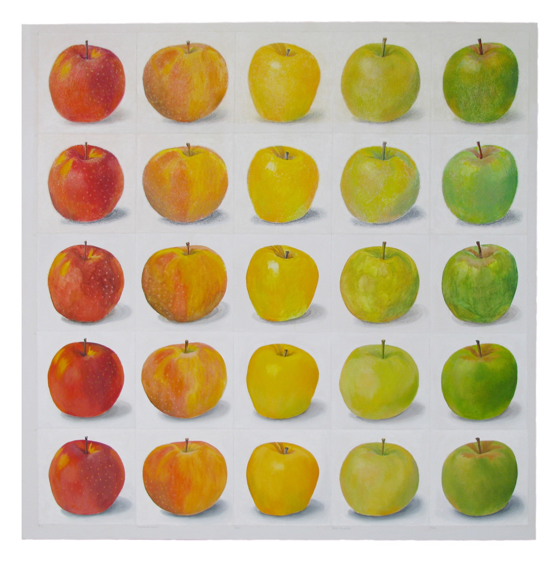 Apples Red to Green by Tom Shelton