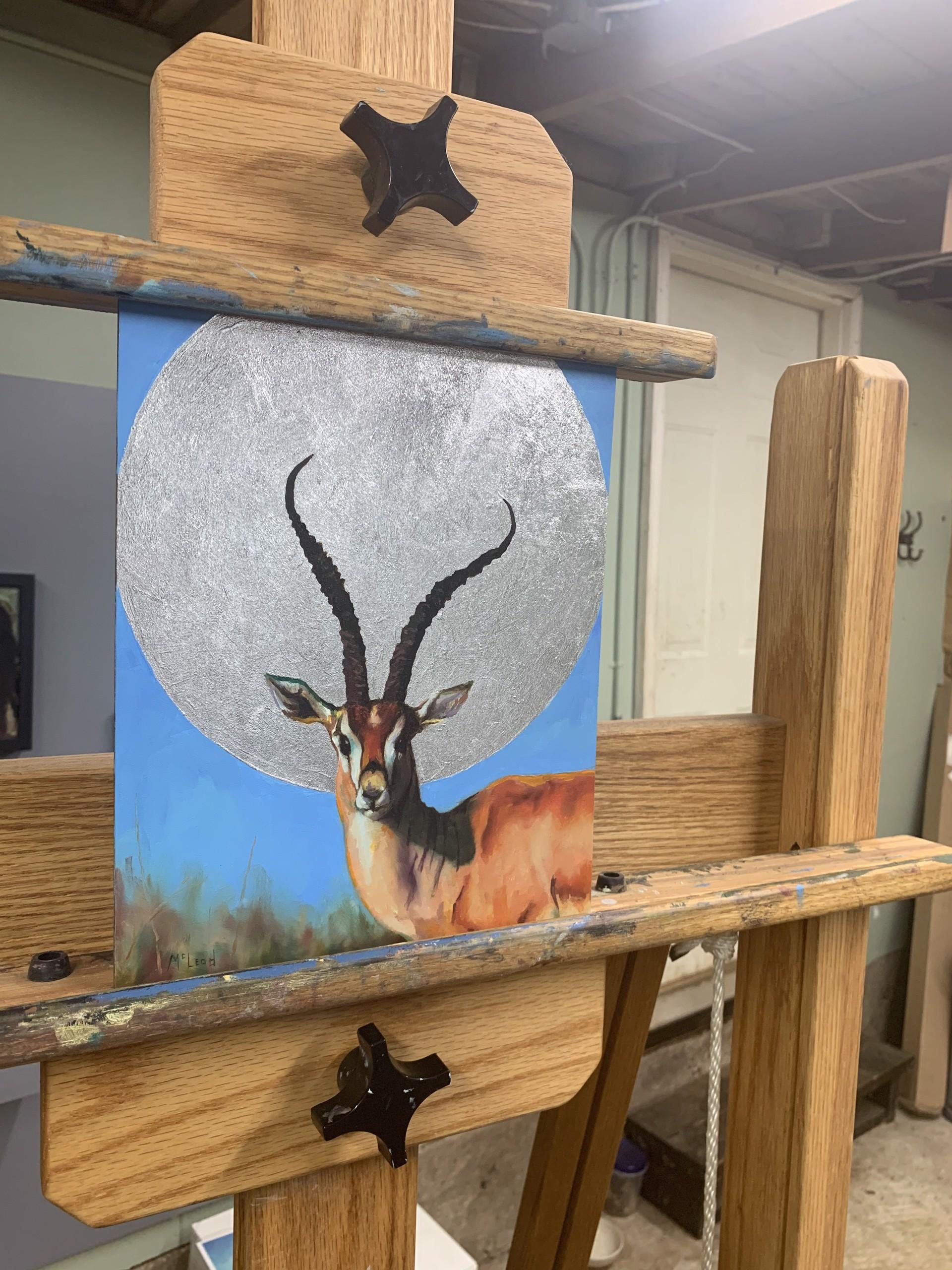 Gazelle by John McLeod