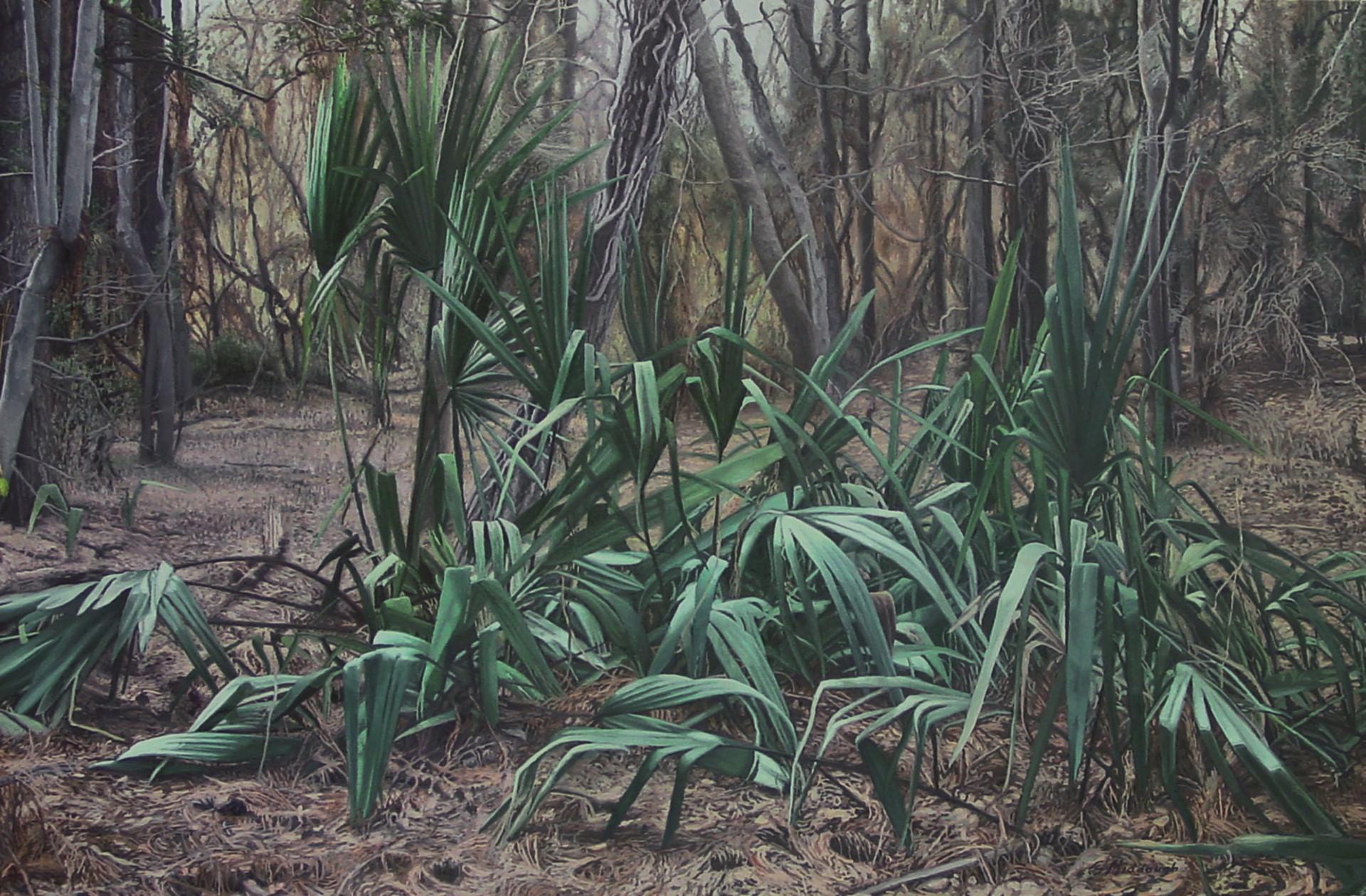 Gathering of Palmettos by Garrett Middaugh