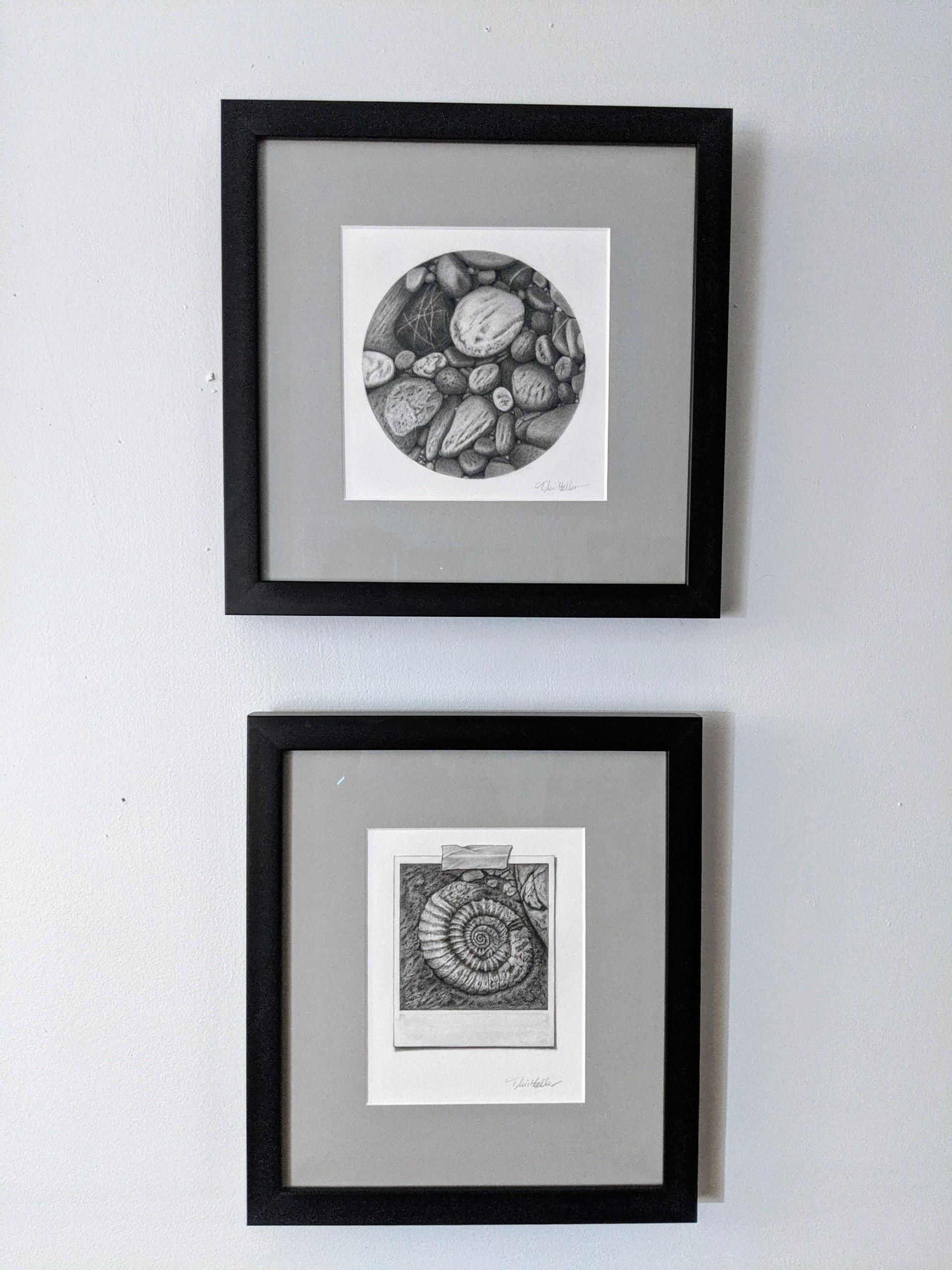 Snapshot Series #5: Ammonite by Tammy Liu-Haller