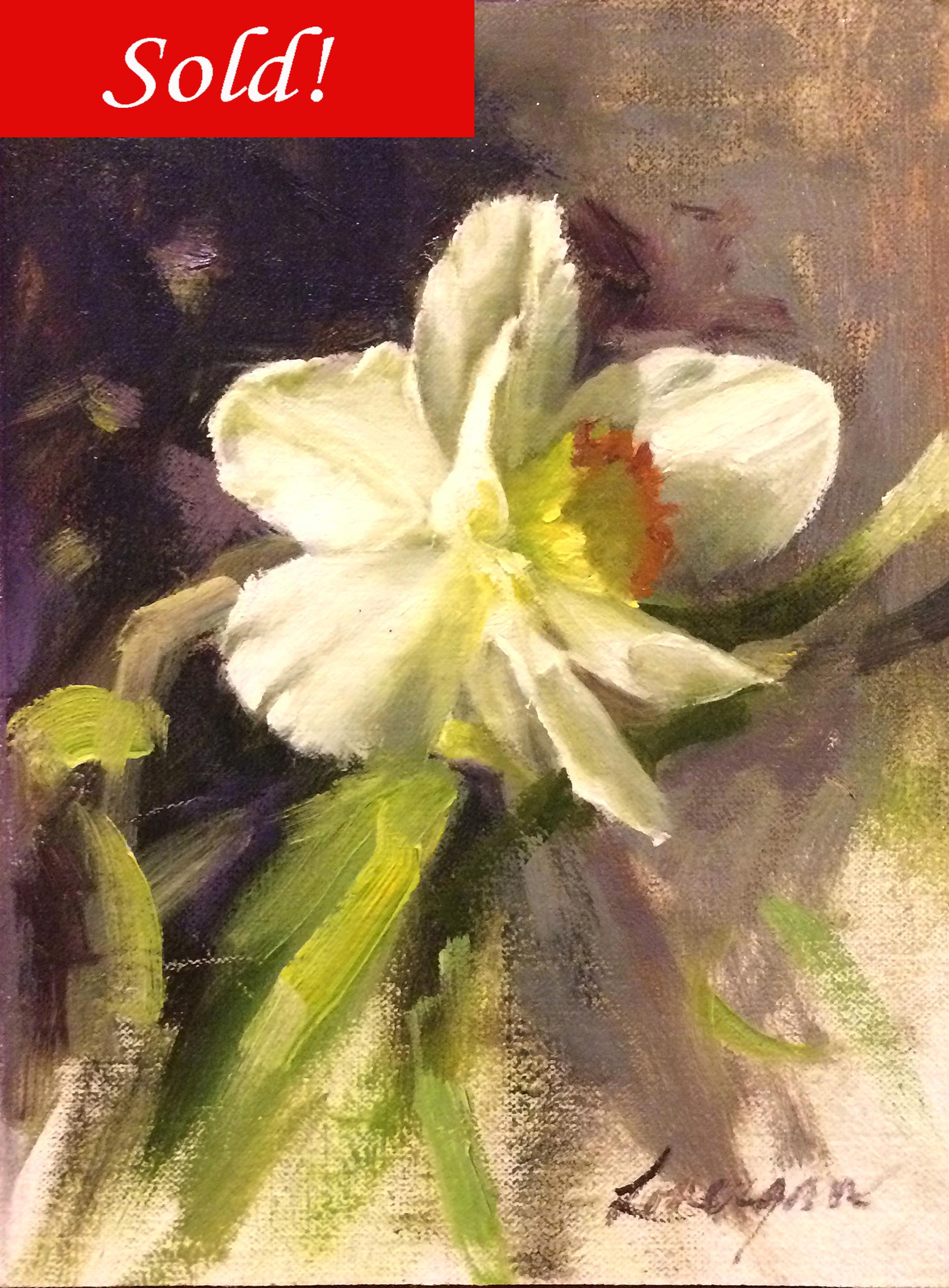 Daffodil by John Lonergan
