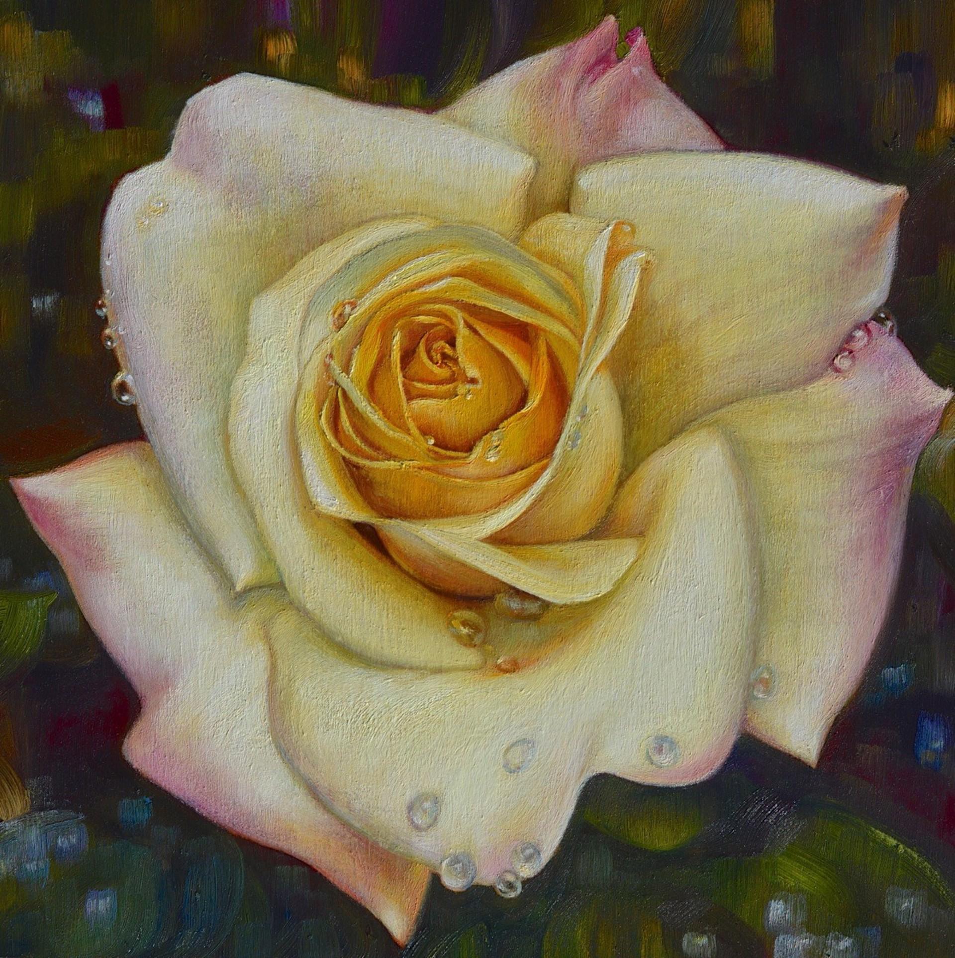 Peace Rose by Caroline Zimmermann