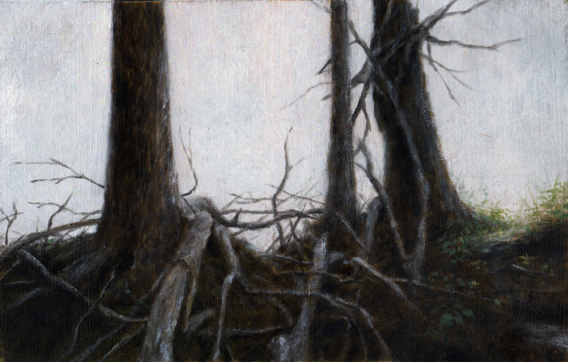 Hemlock Trees at Sunset by Lisa Lebofsky