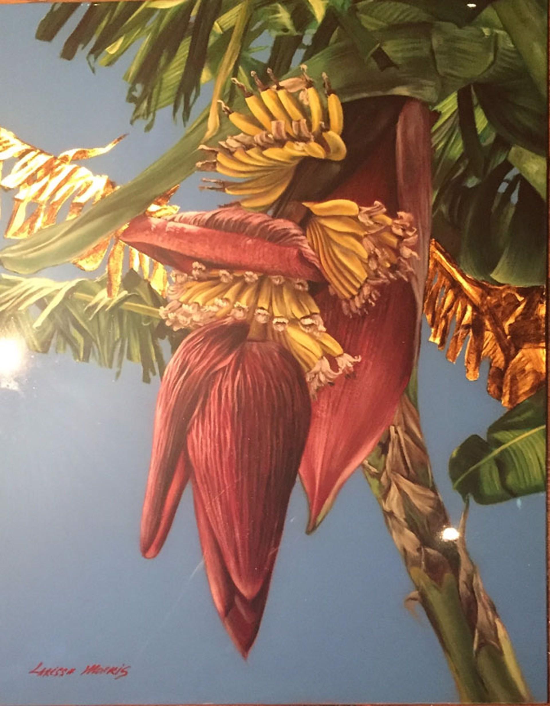 Banana Flower II by Larissa Morais