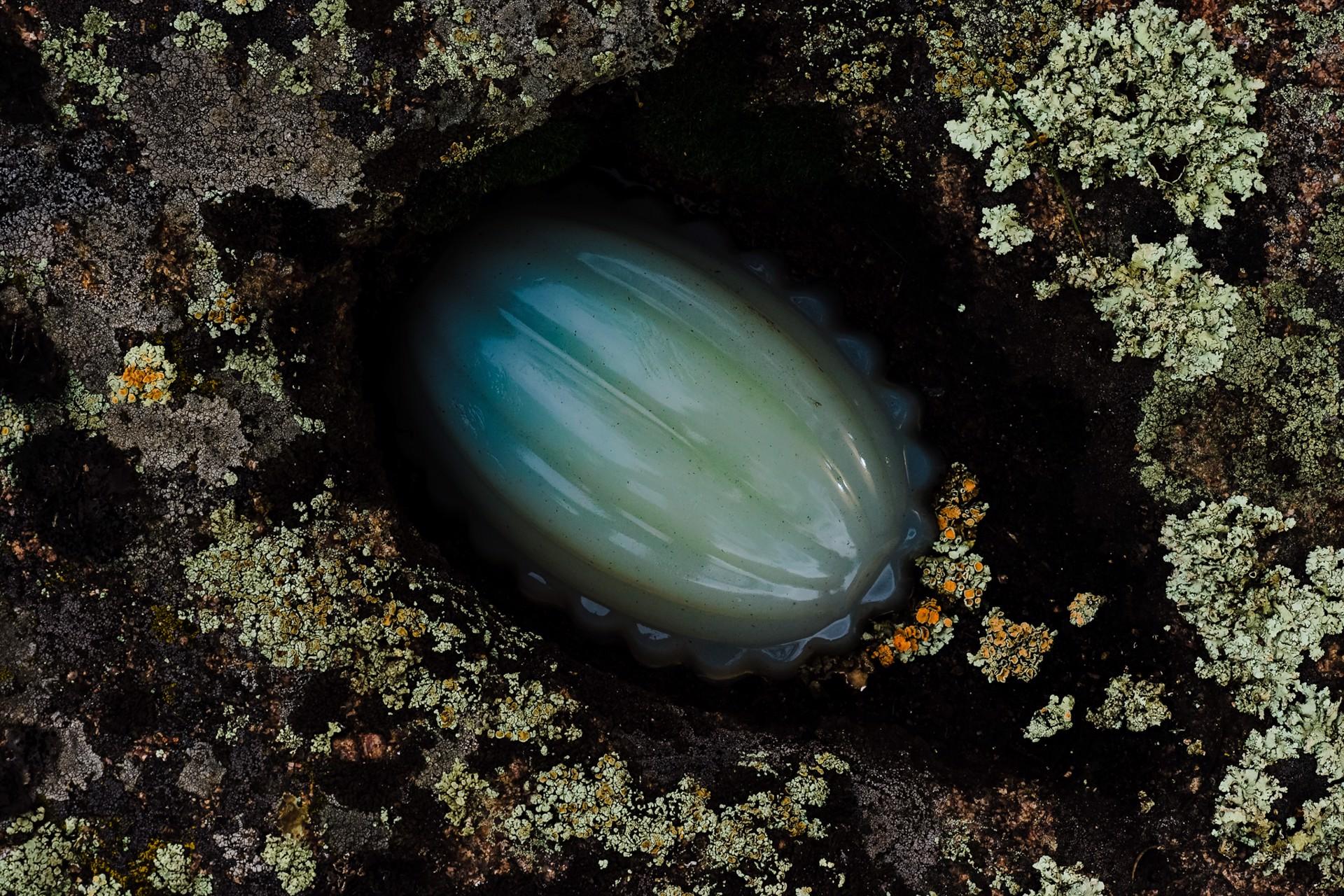 Jelly & Lichen III by Jenya Chernoff
