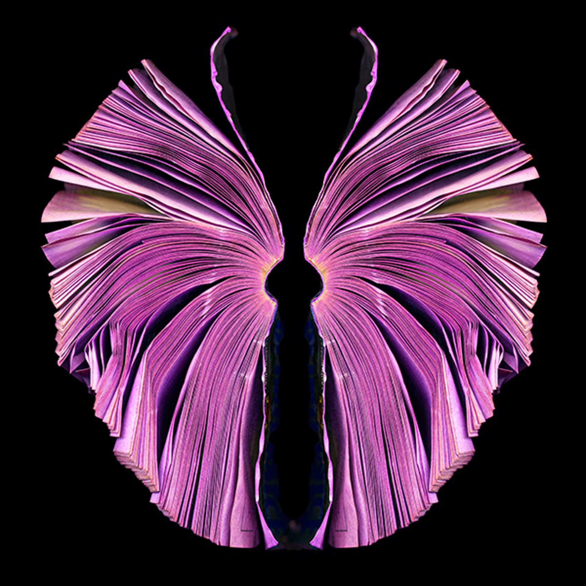 Pink Butterfly by Cara Barer