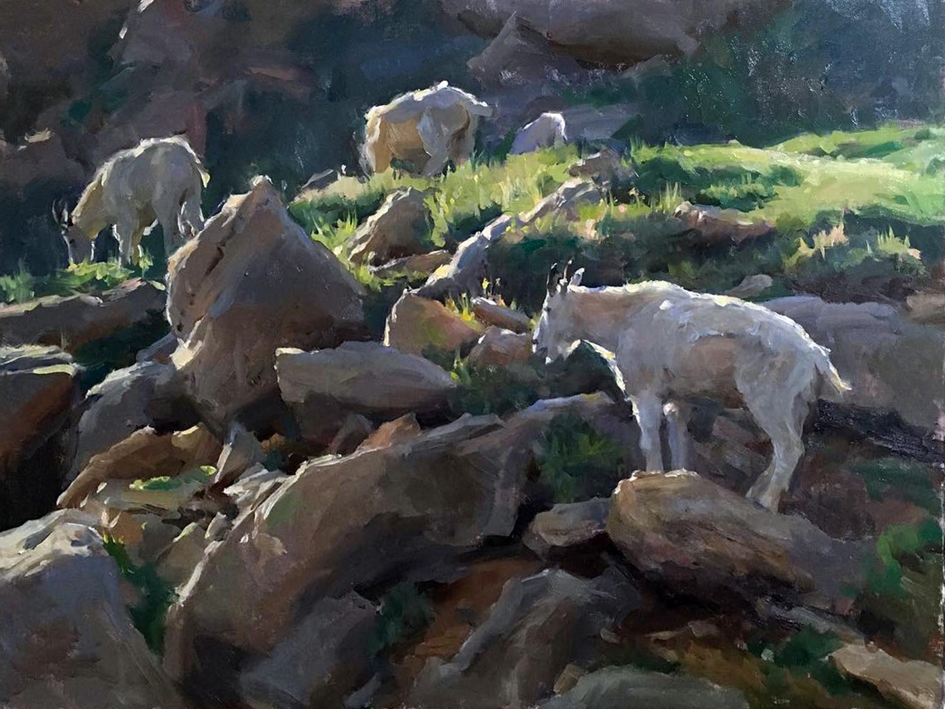 Mountain Goats by Kyle Ma