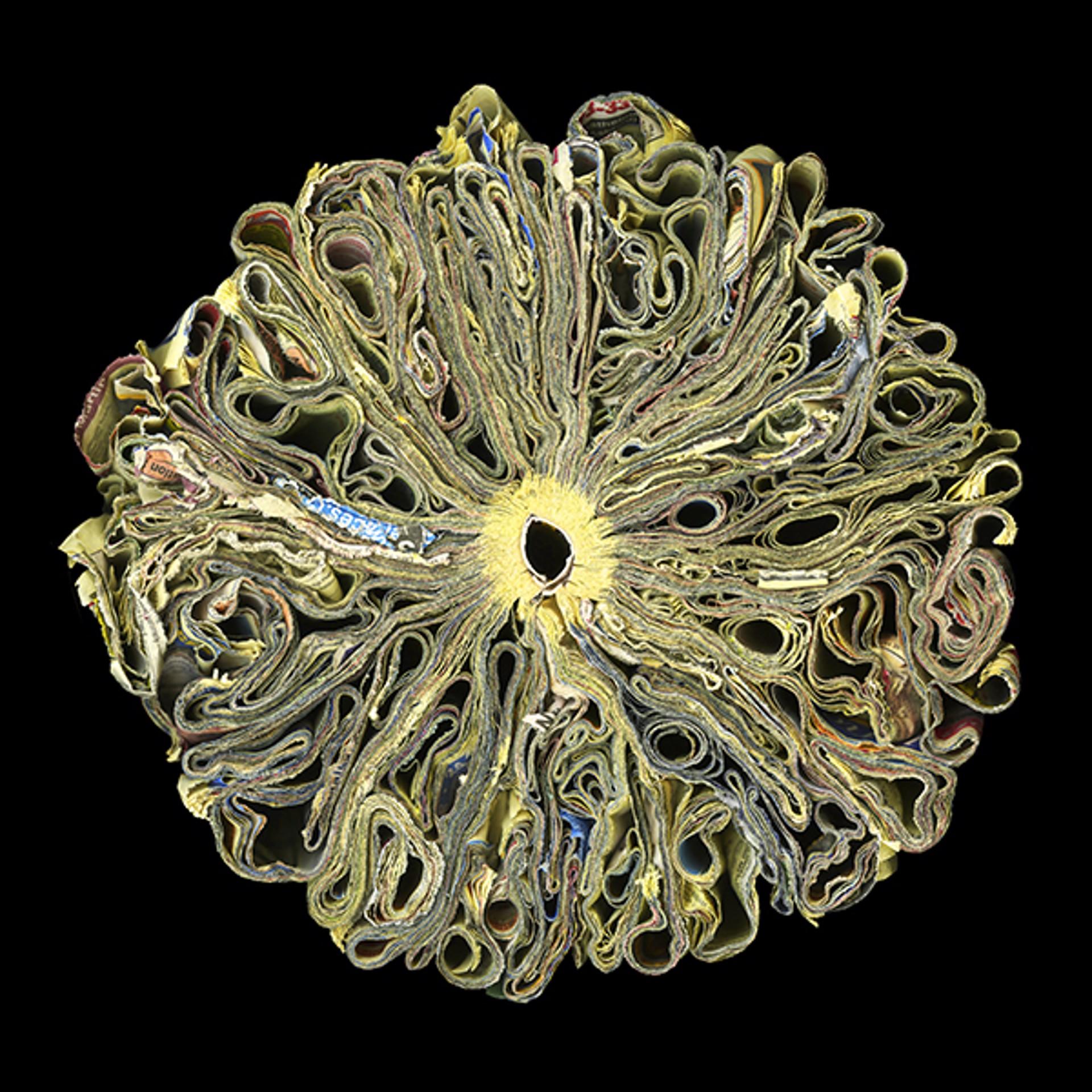 Sunflower by Cara Barer
