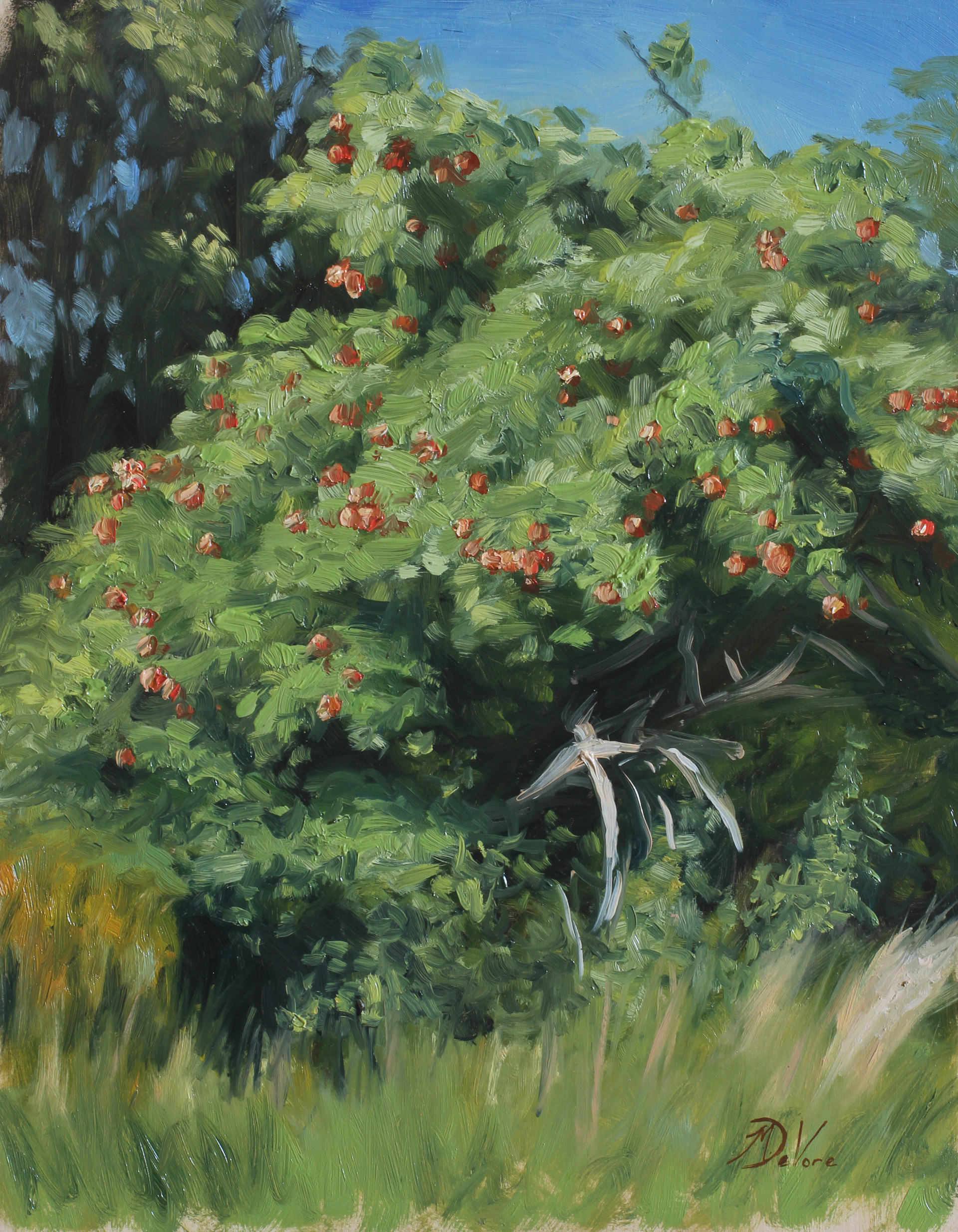 Apple Tree by Michael DeVore
