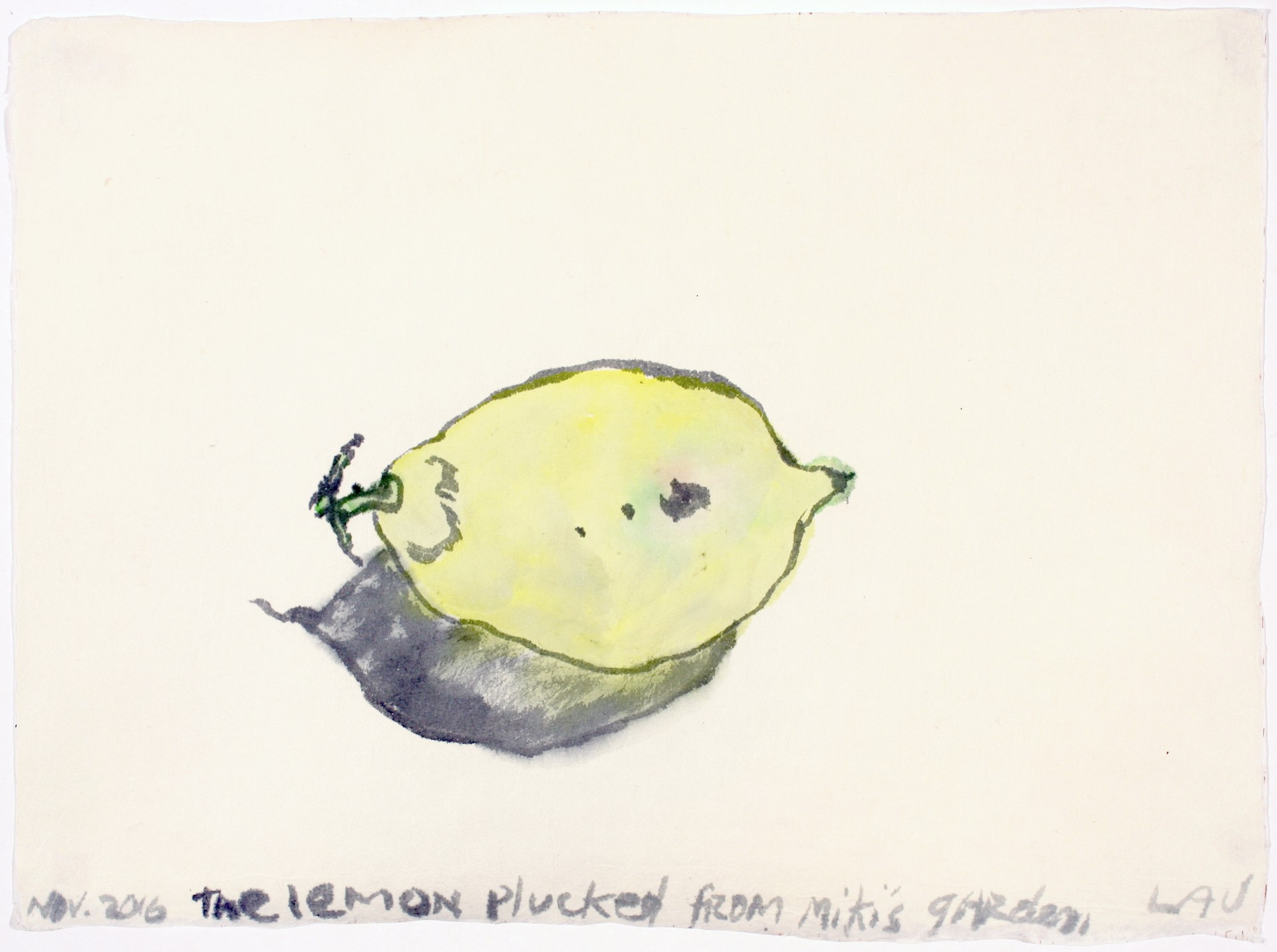 the lemon picked from miki's garden by Alan Lau