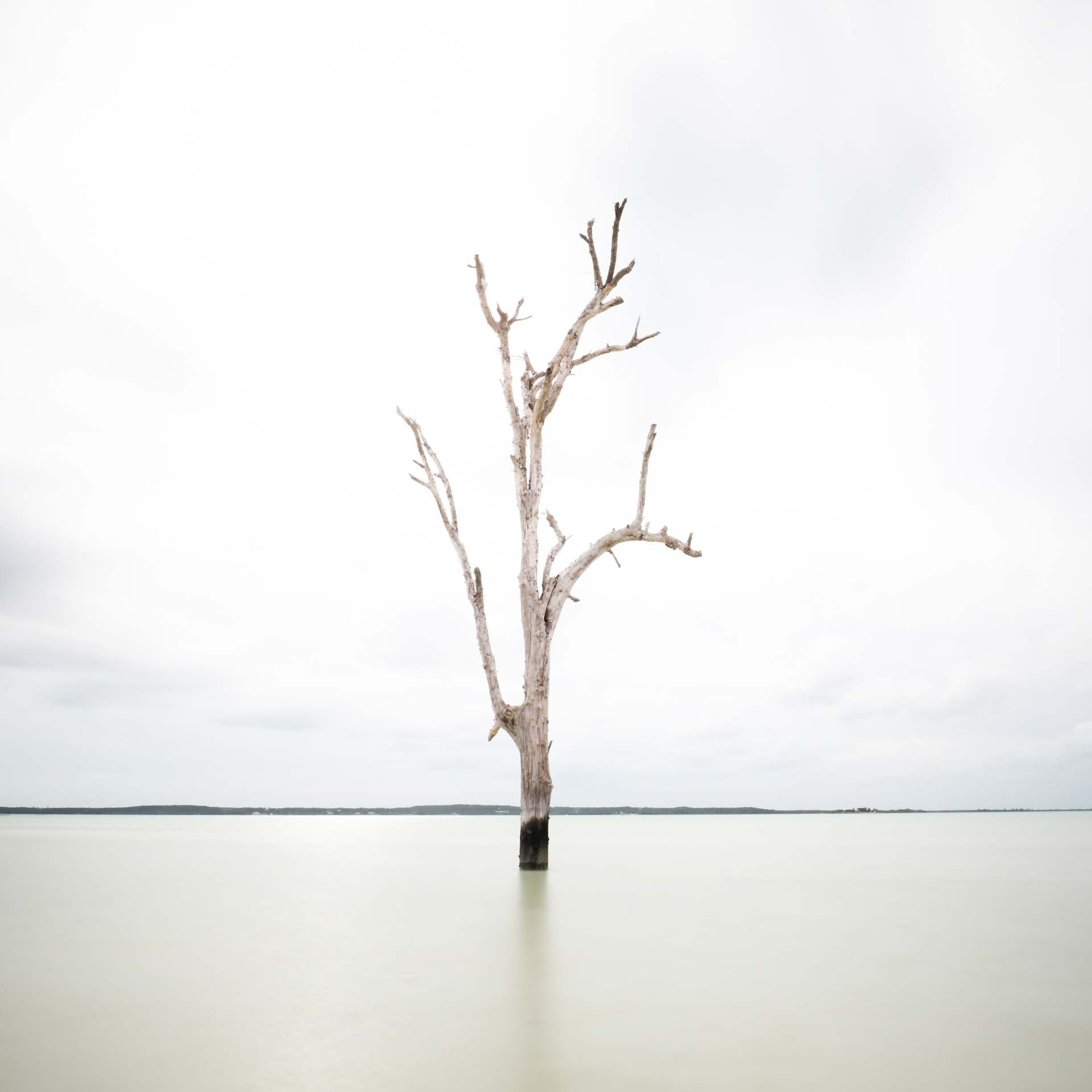 Tall Tree at Harbour Island by Keith Ramsdell