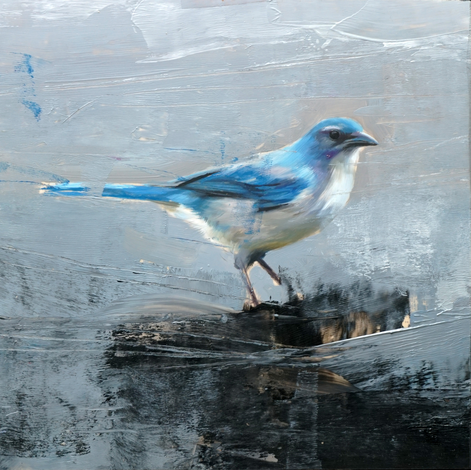 Studio Note with Scrub Jay by Alpay Efe