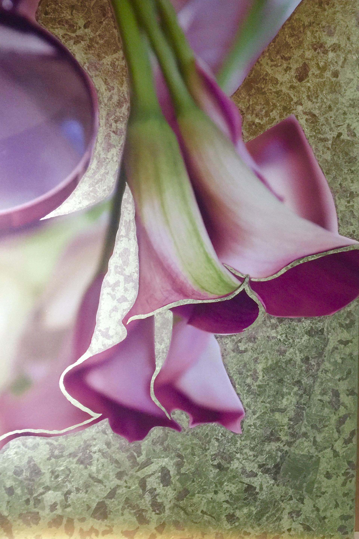 Purple Calla Lillies by Luciana Pampalone