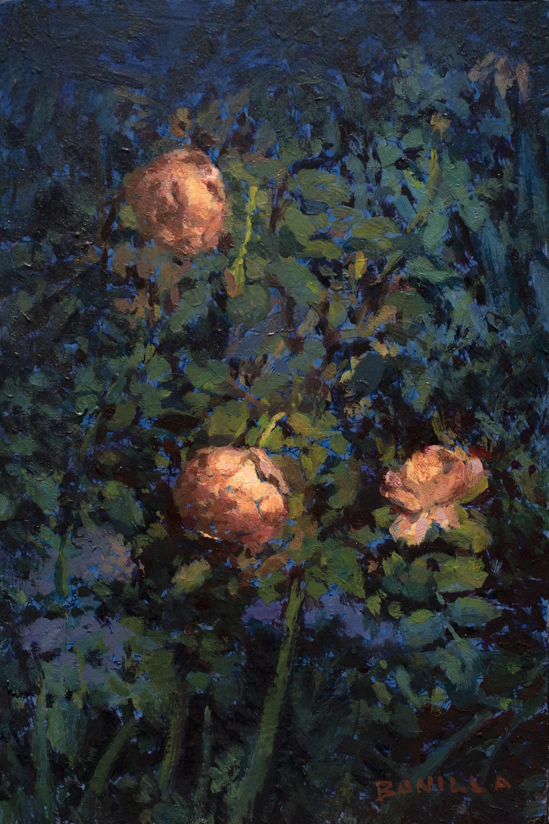 Study for Jude by Raymond Bonilla