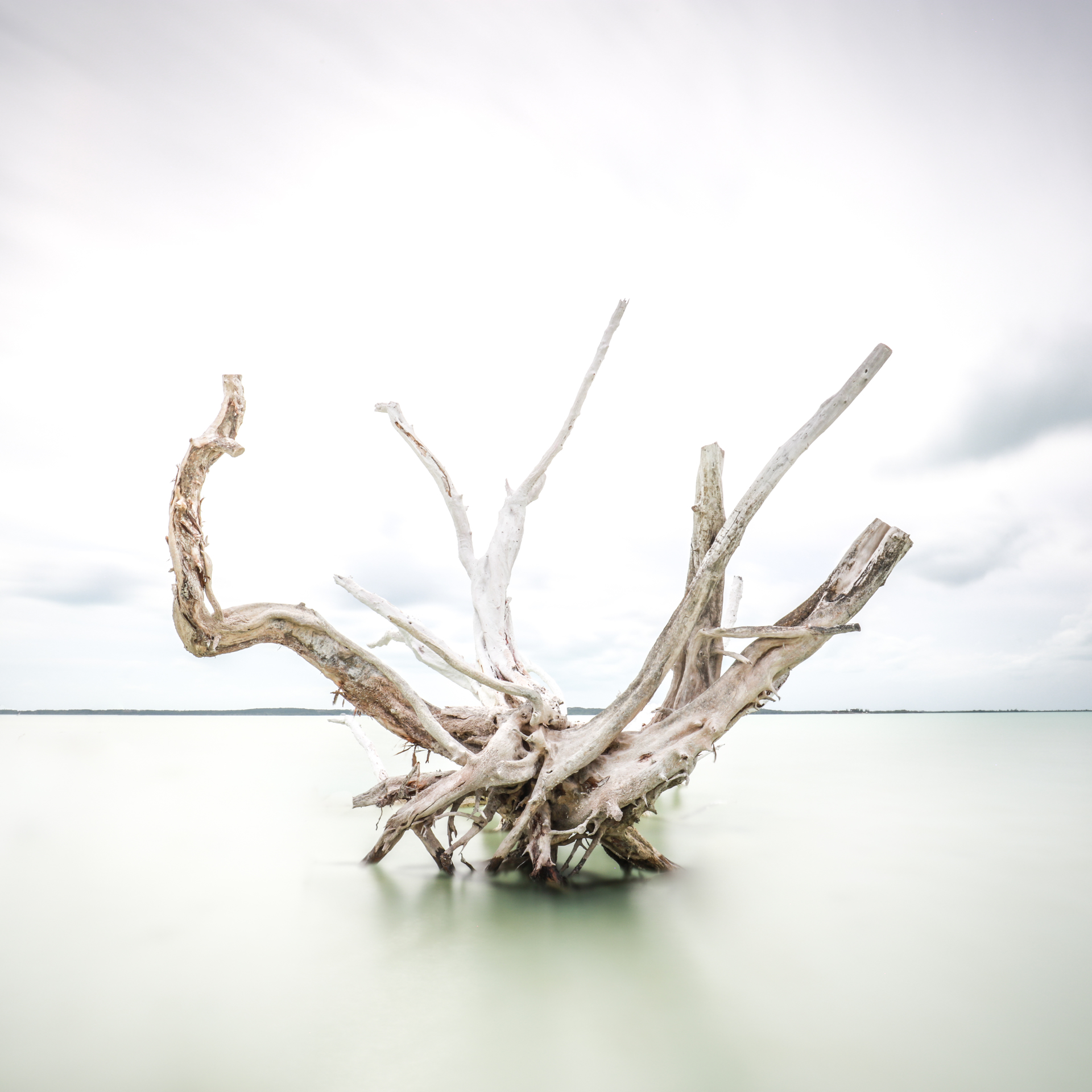 Driftwood at Harbour Island by Keith Ramsdell