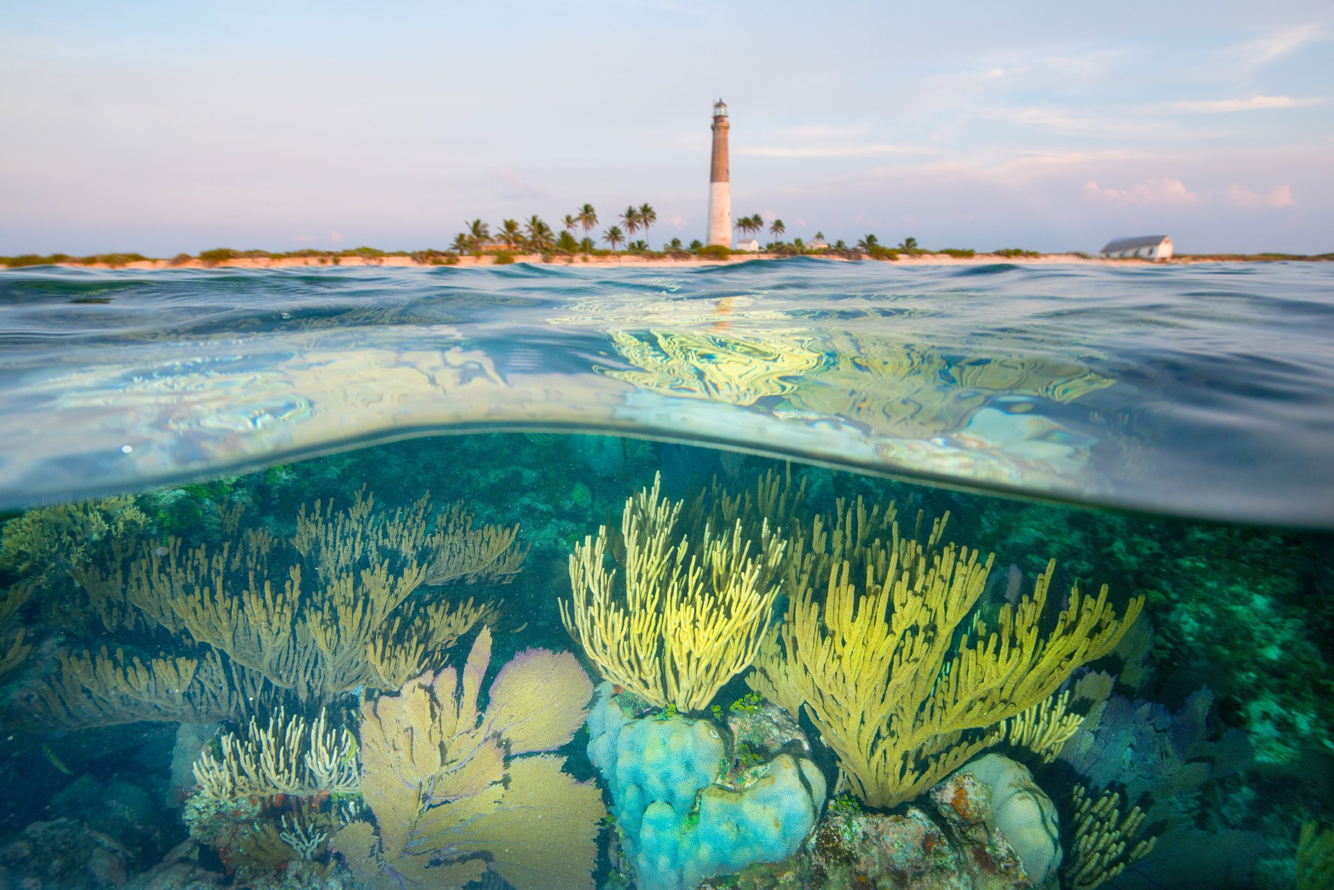 Reef at Loggerhead Key by Carlton Ward Jr