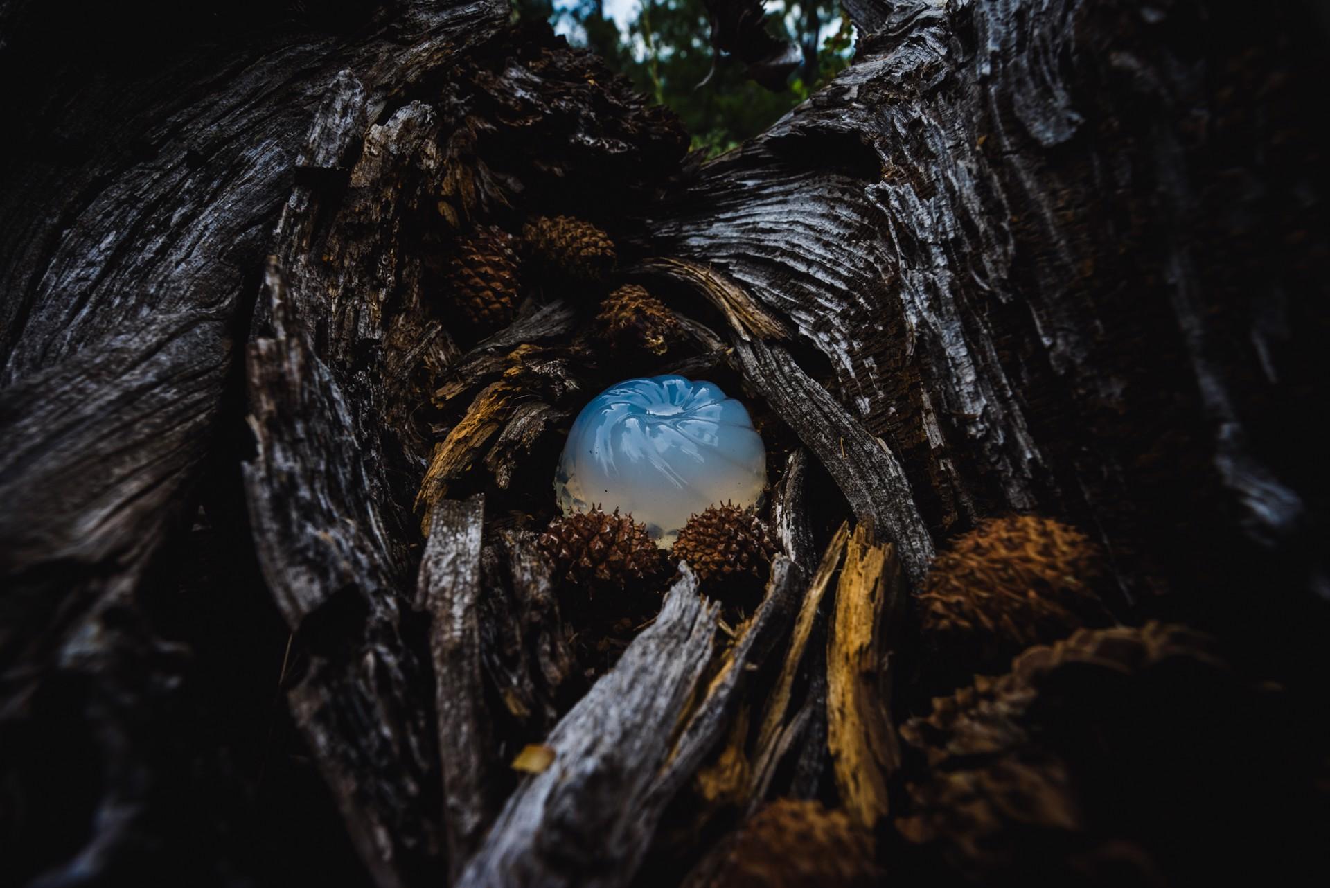 Nest by Jenya Chernoff